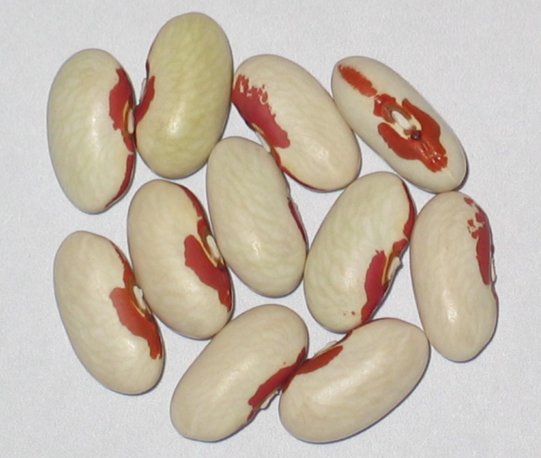 image of Soldier beans