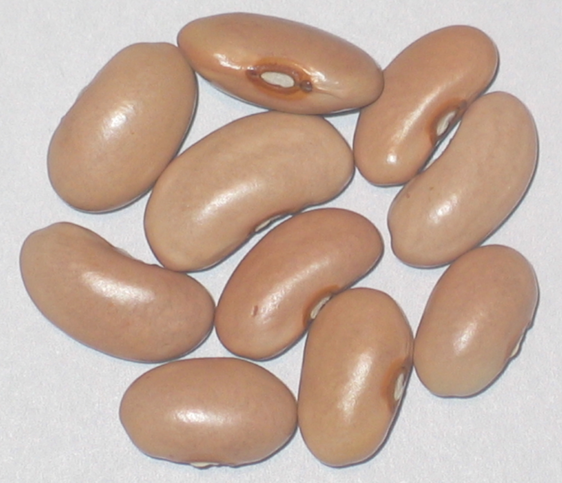 image of Tanya's Pink Pod beans