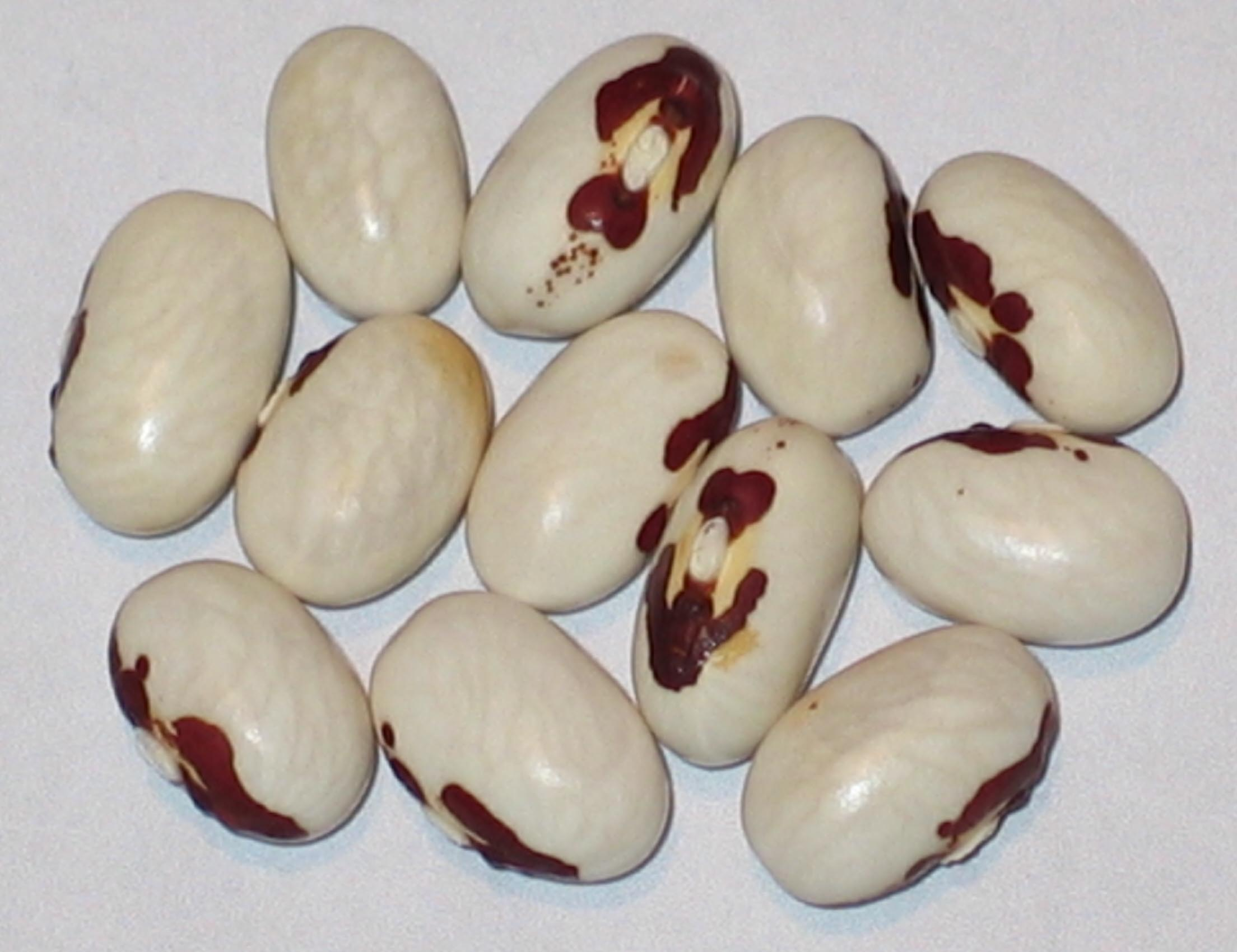 image of Tenderpod beans