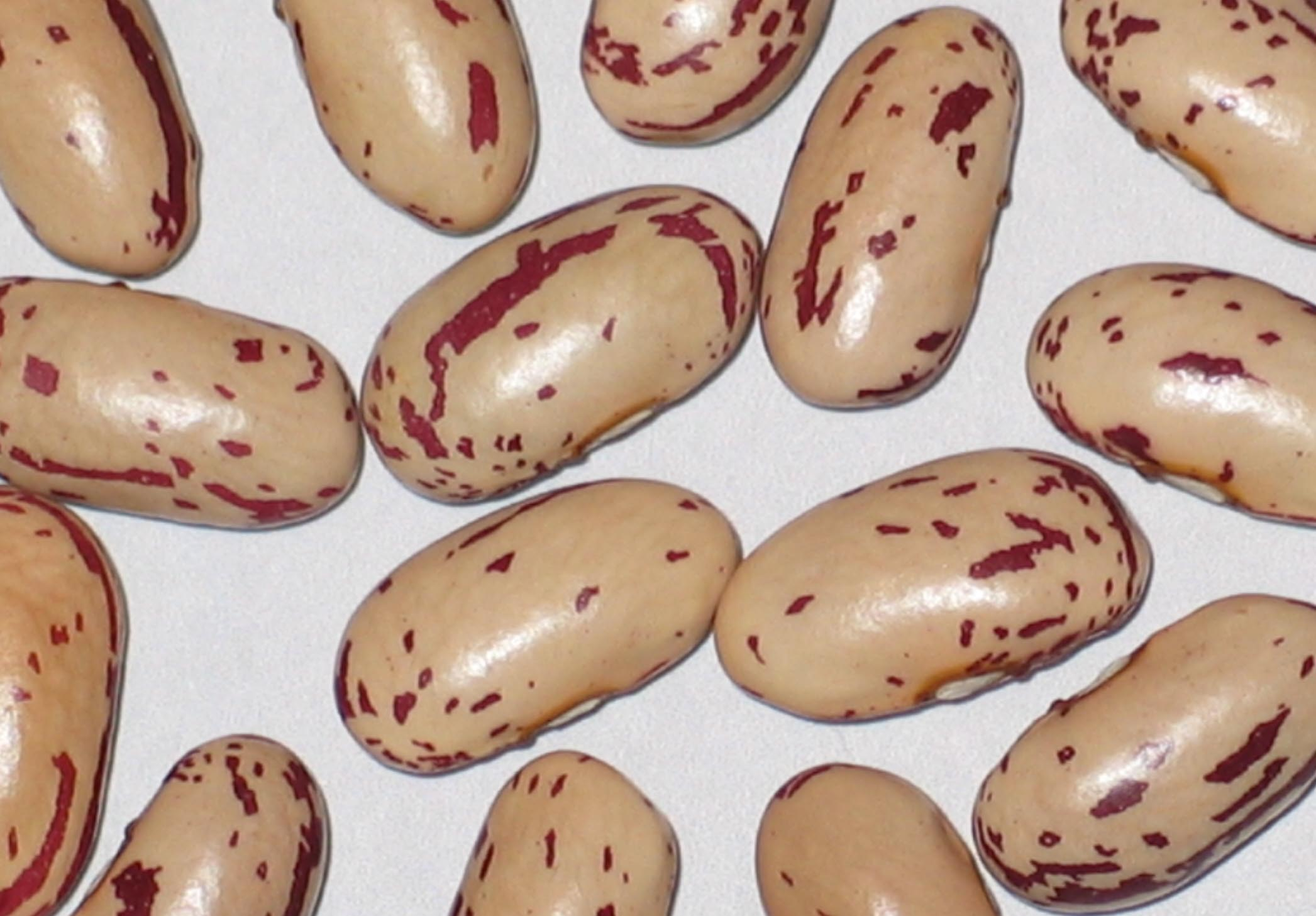 image of Uncle Willies beans