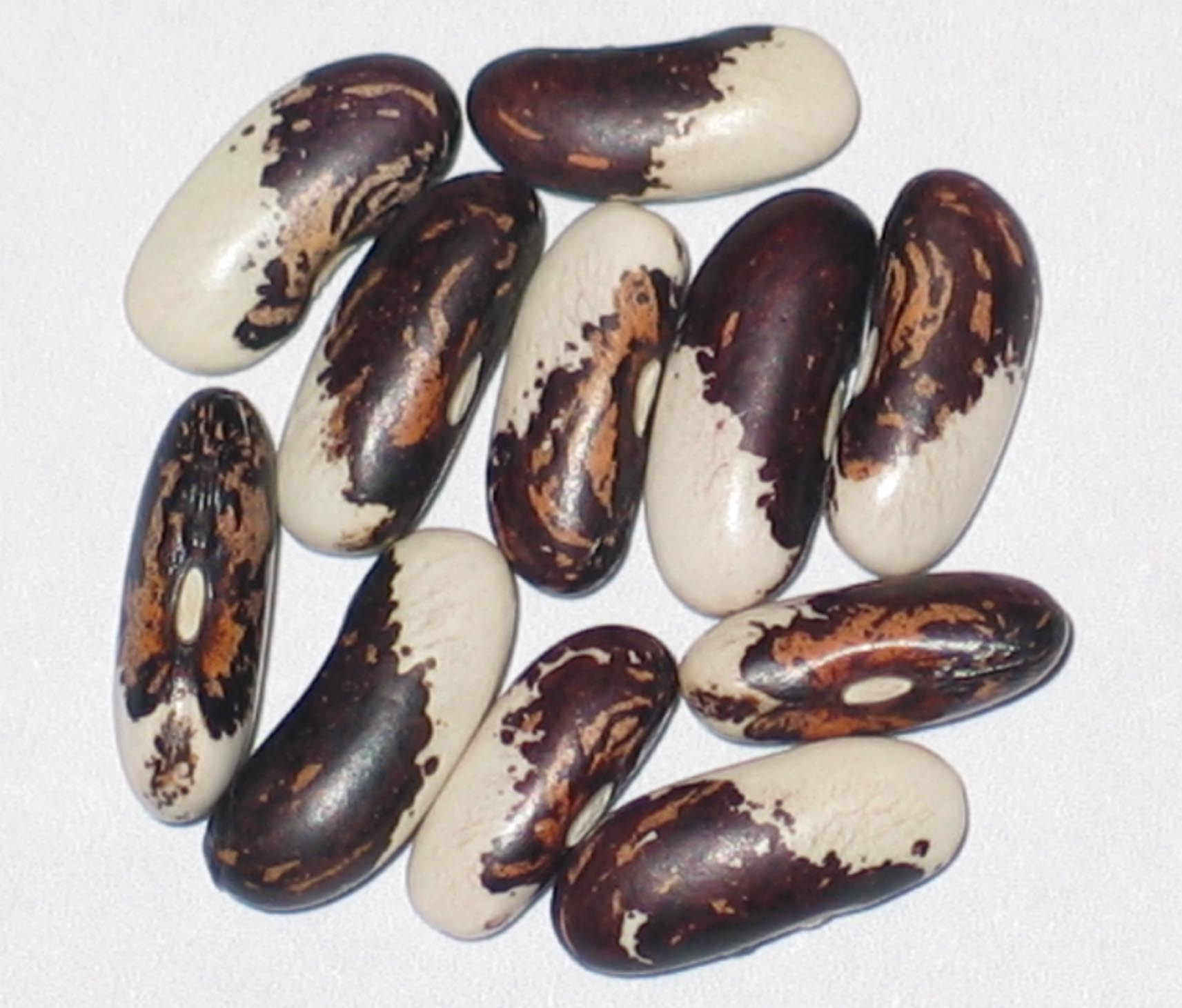 image of Vermont Appaloosa beans
