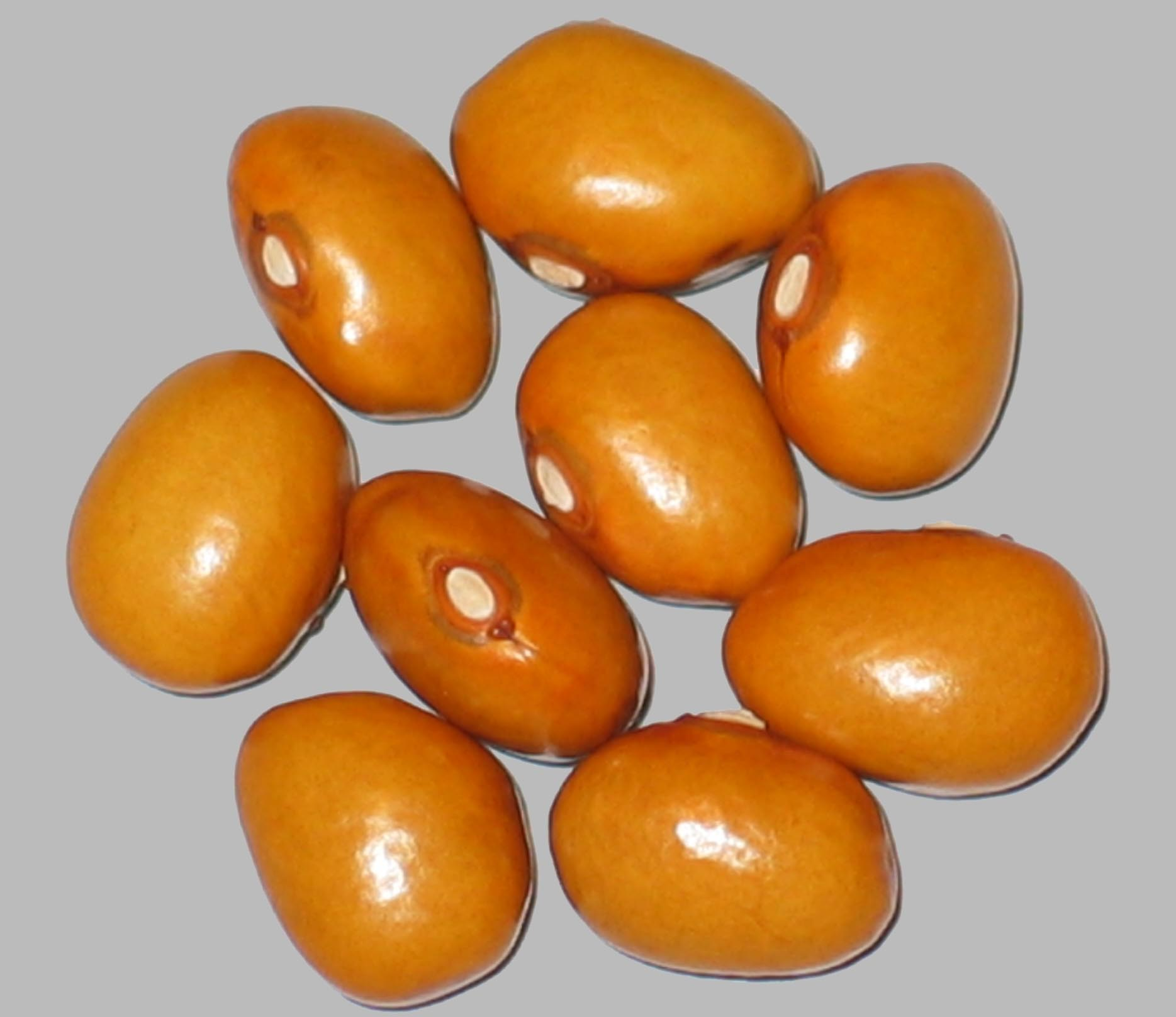 image of Amber Queen beans