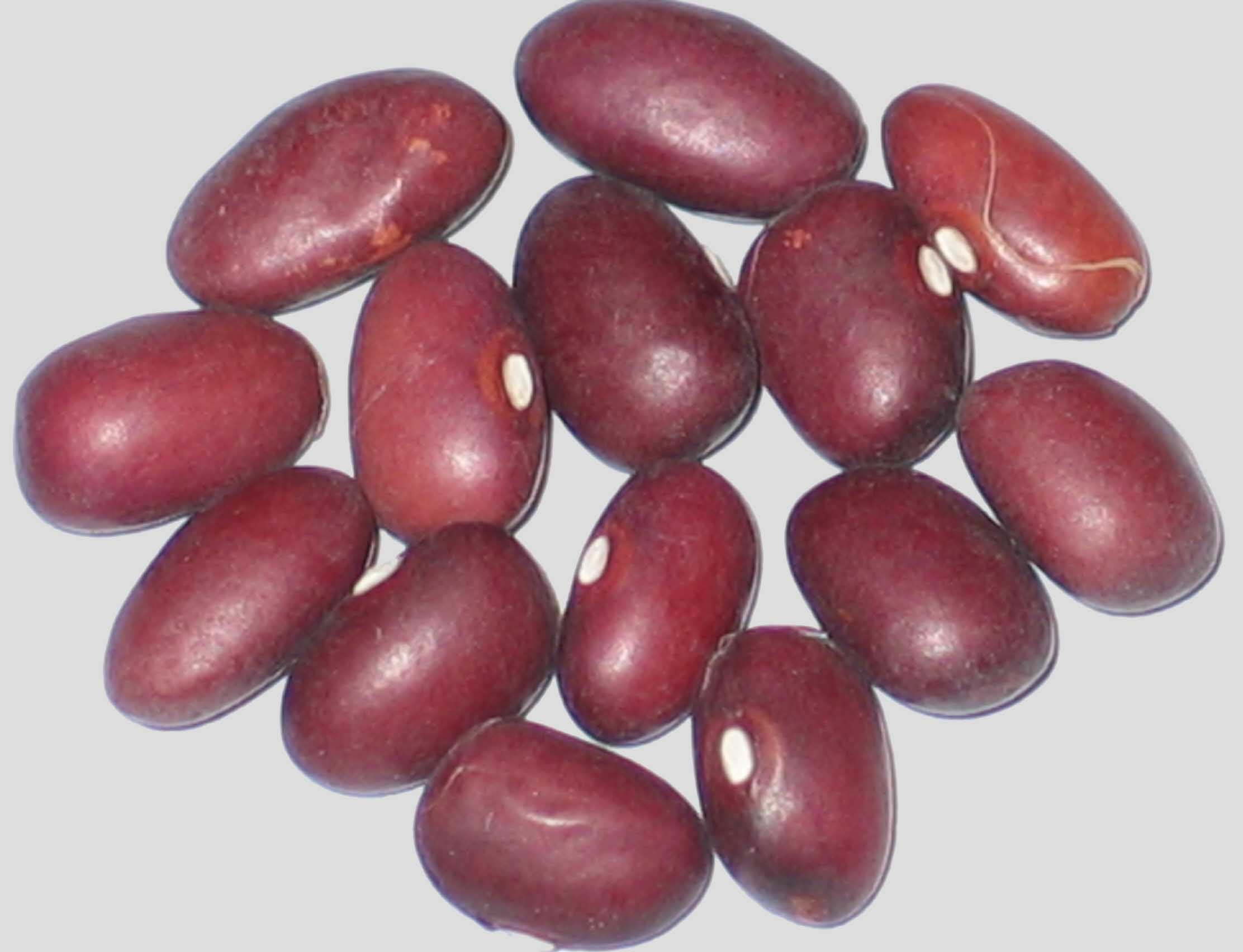 image of Amethyst beans