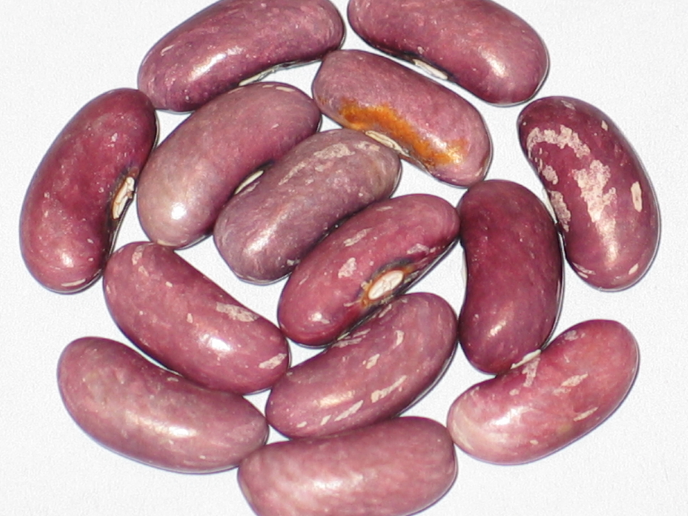 image of Atwater beans