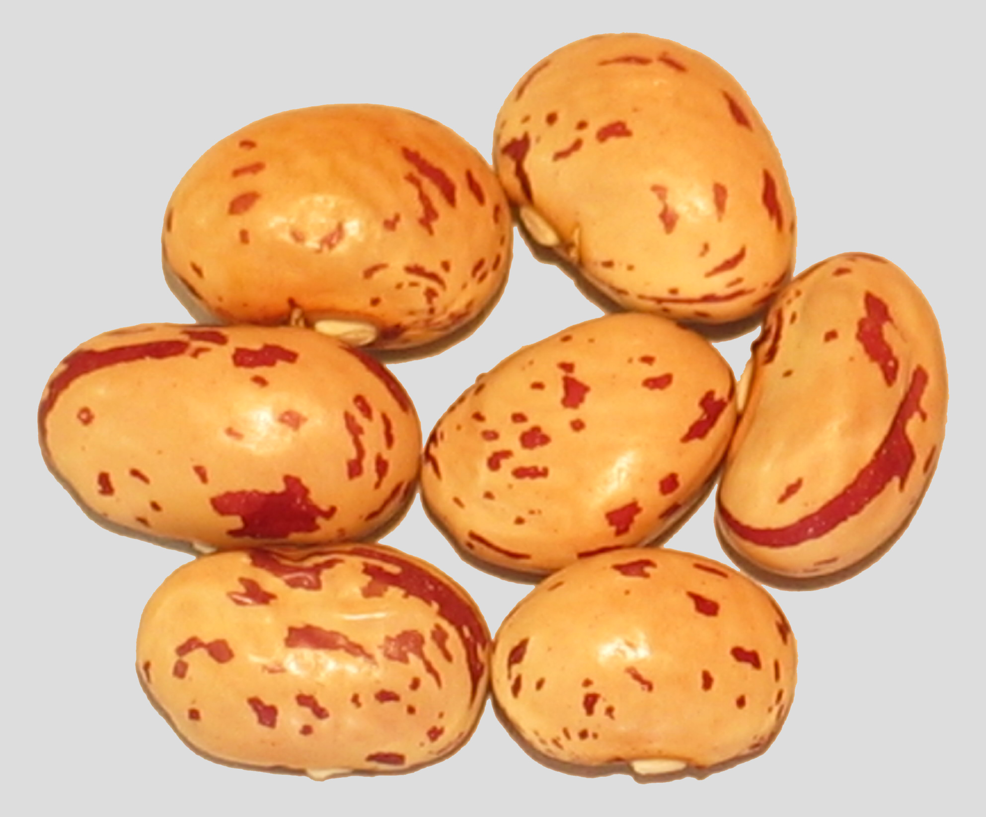 image of Beauty Pod beans