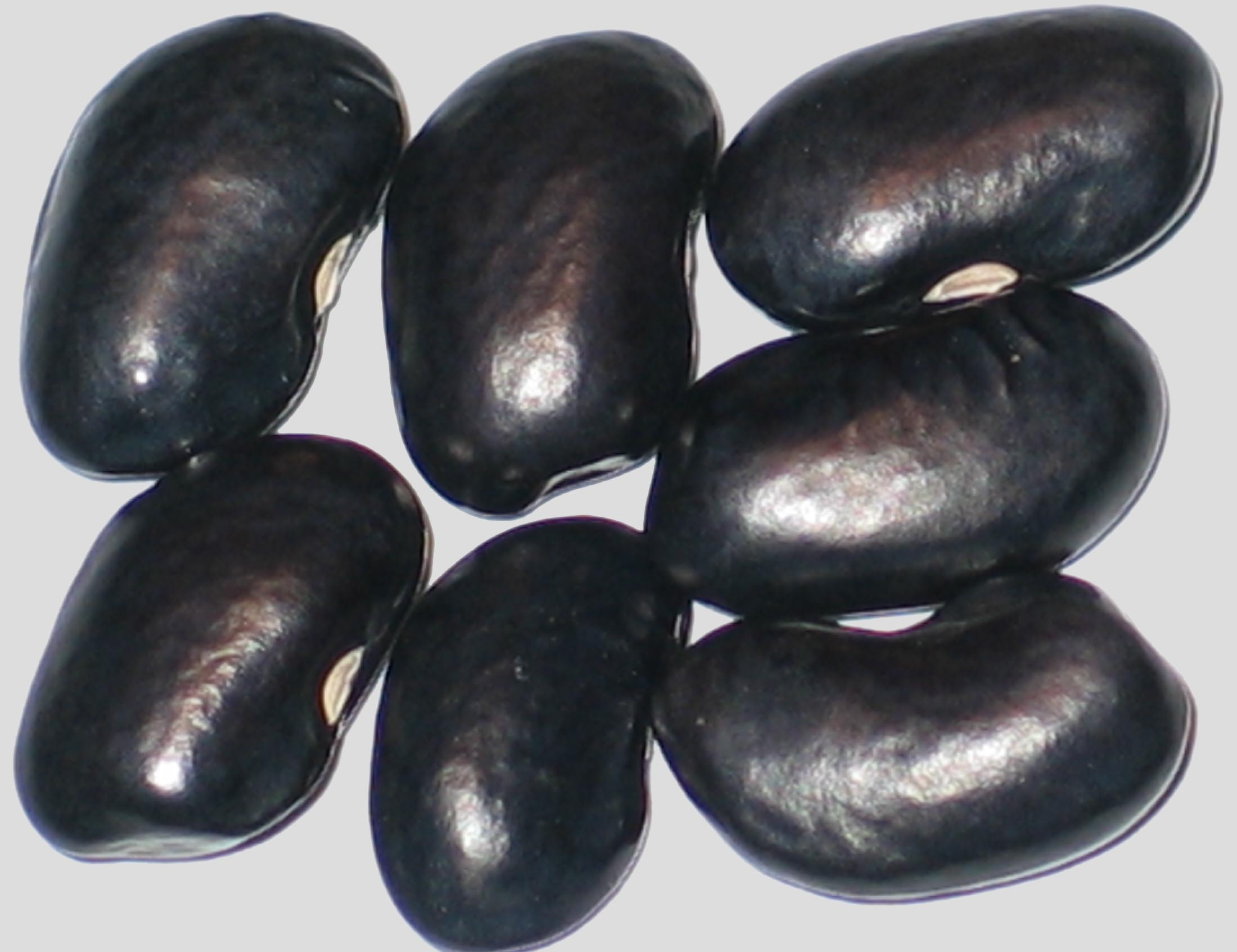 image of Chase River beans