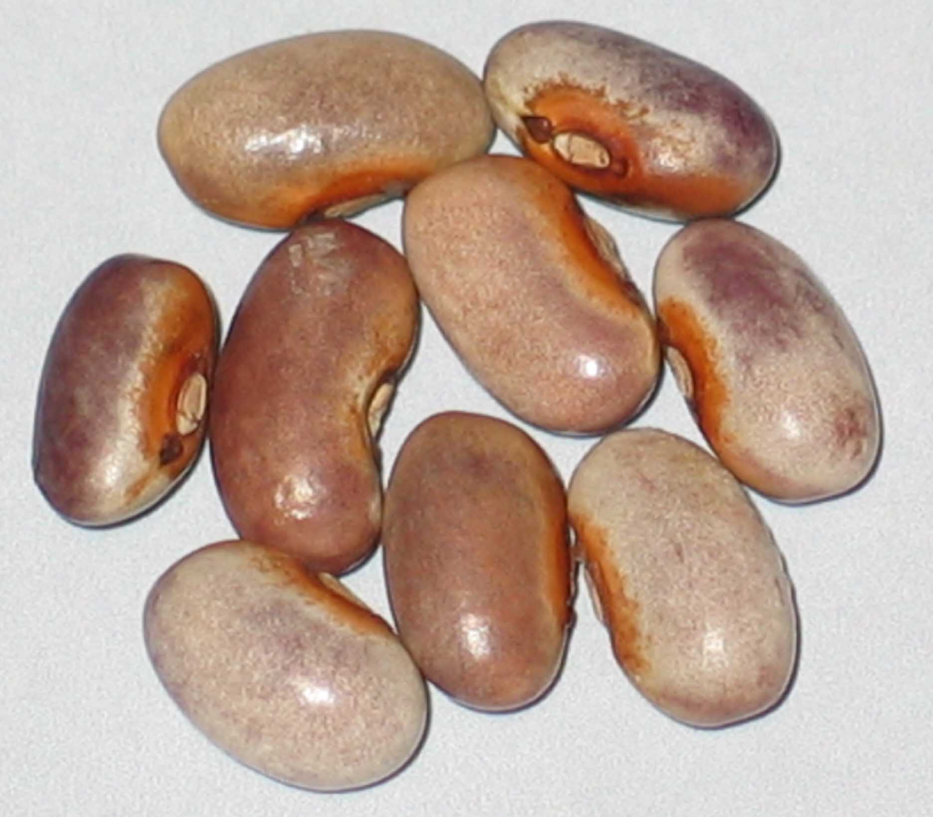 image of Chaska Purple beans