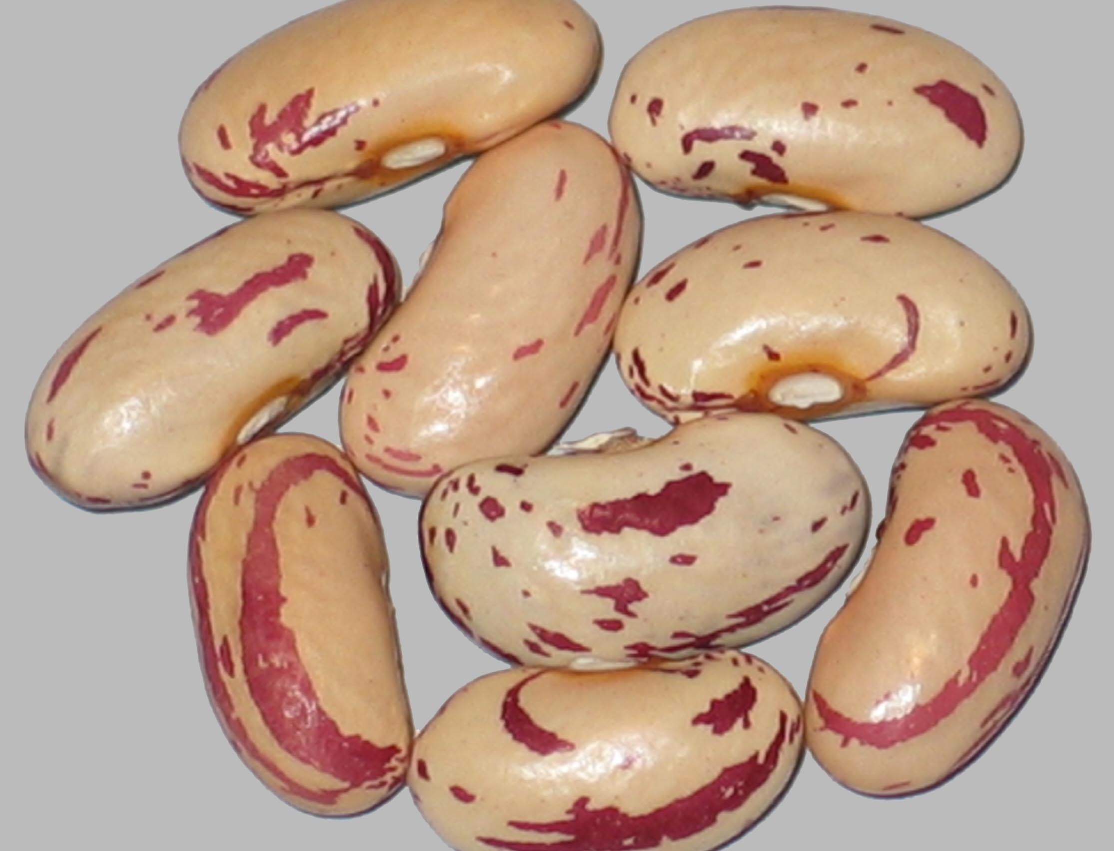 image of Croatian Cranberry beans