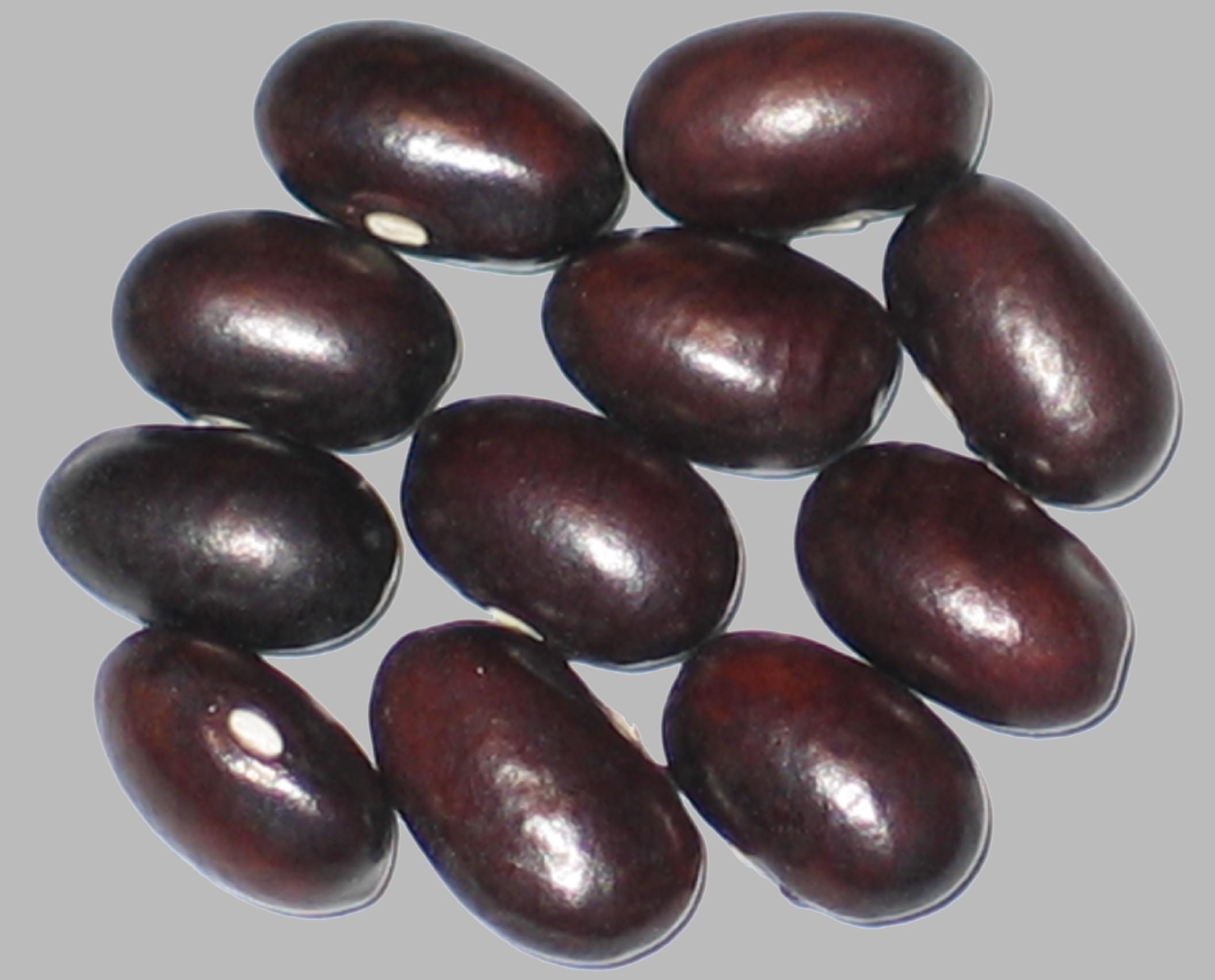 image of Evolutie beans