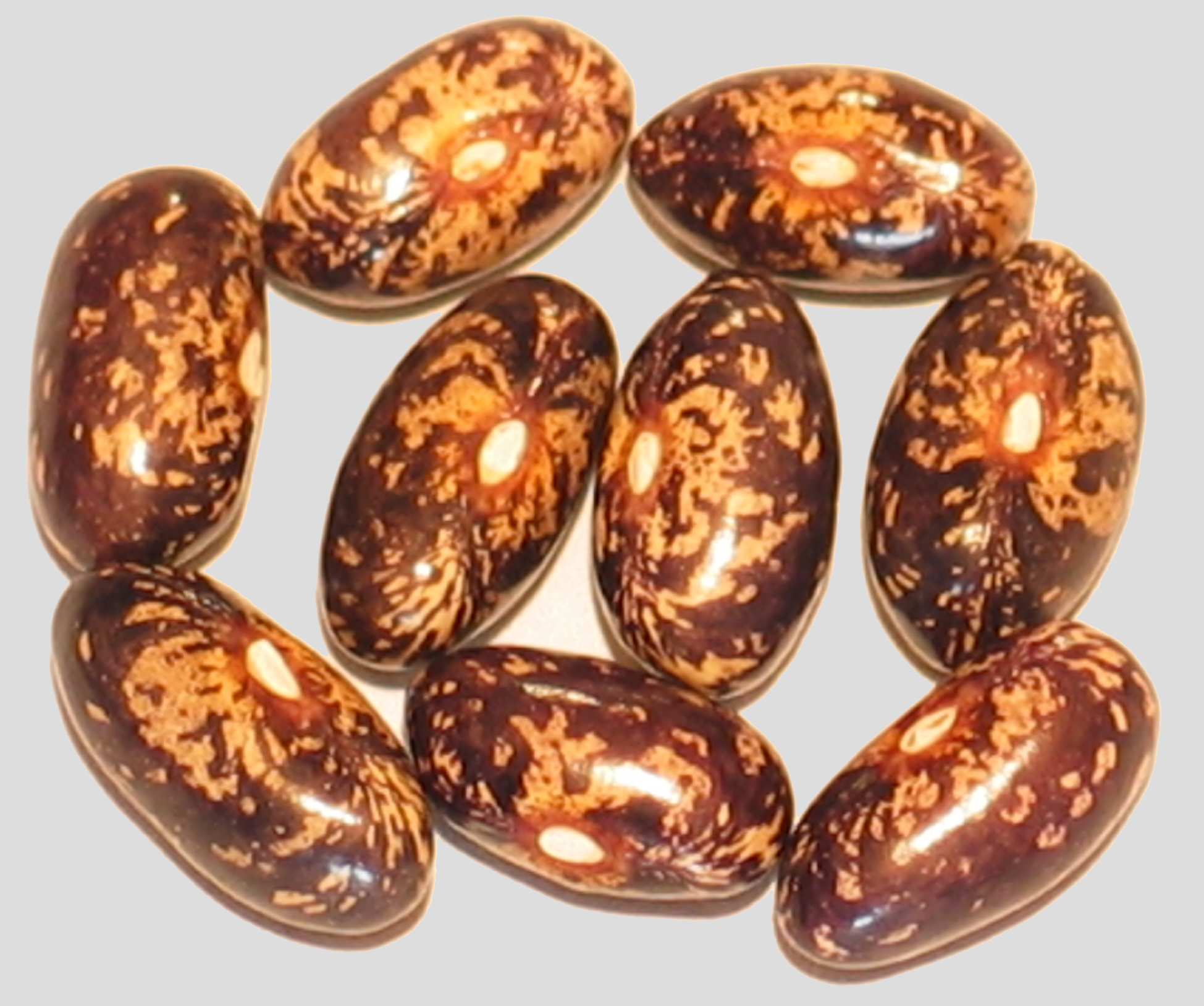 image of Fisole Rassacher Kipfleer beans