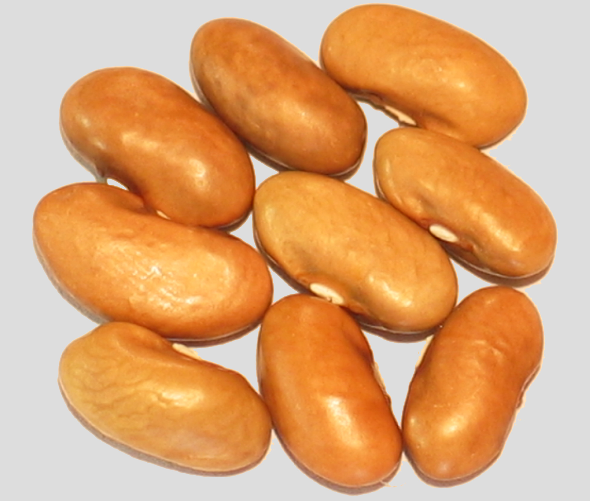 image of Gold Of Bacau beans