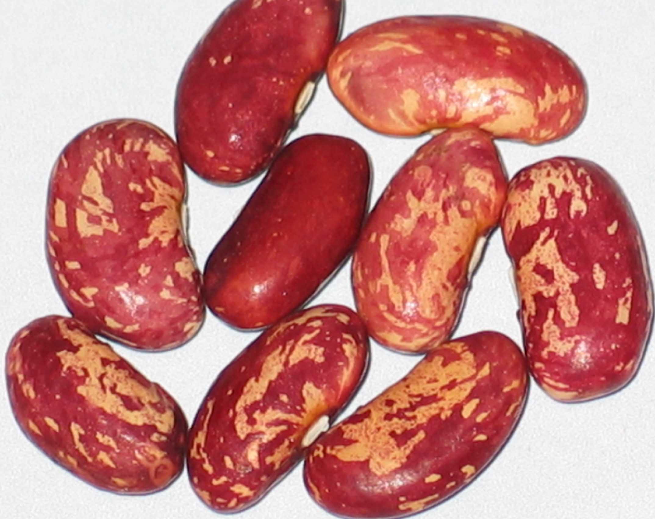 image of Goose Cranberry beans
