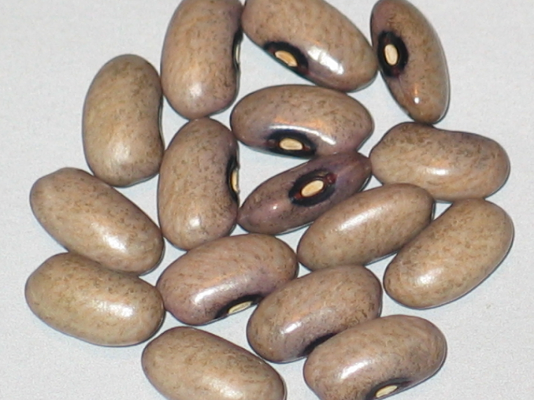 image of Green Savage beans