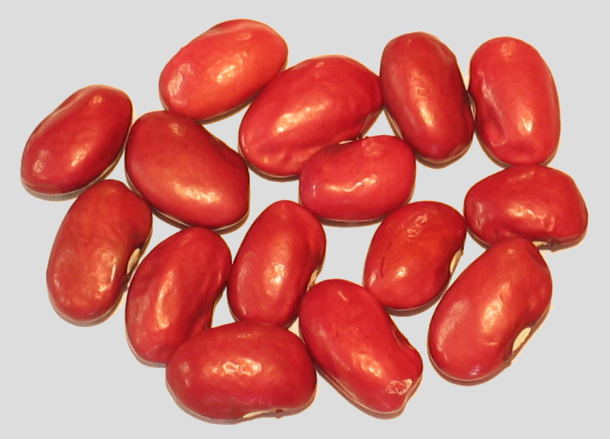 image of Hidatsa Red beans