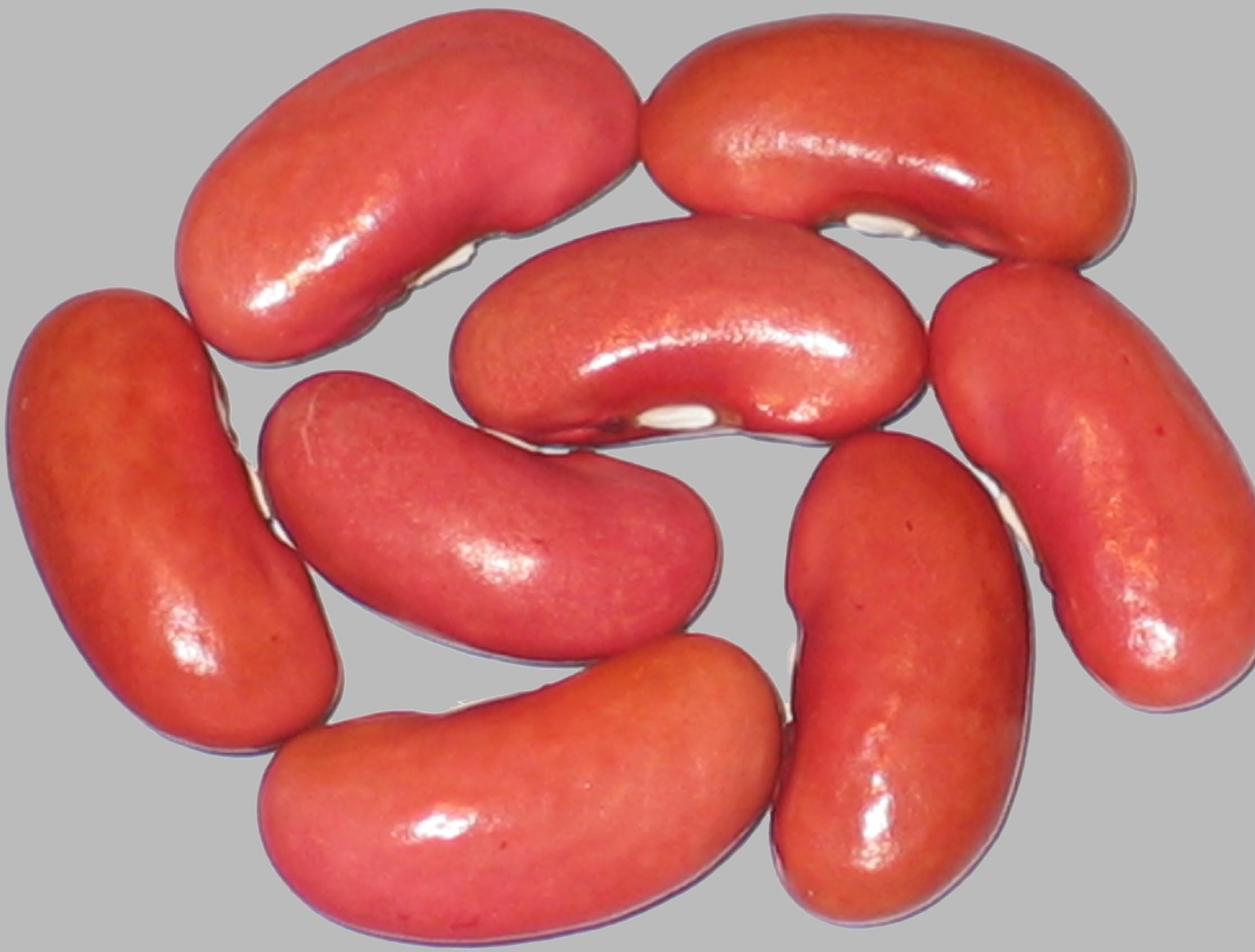 image of Jack Rabbit Kidney beans