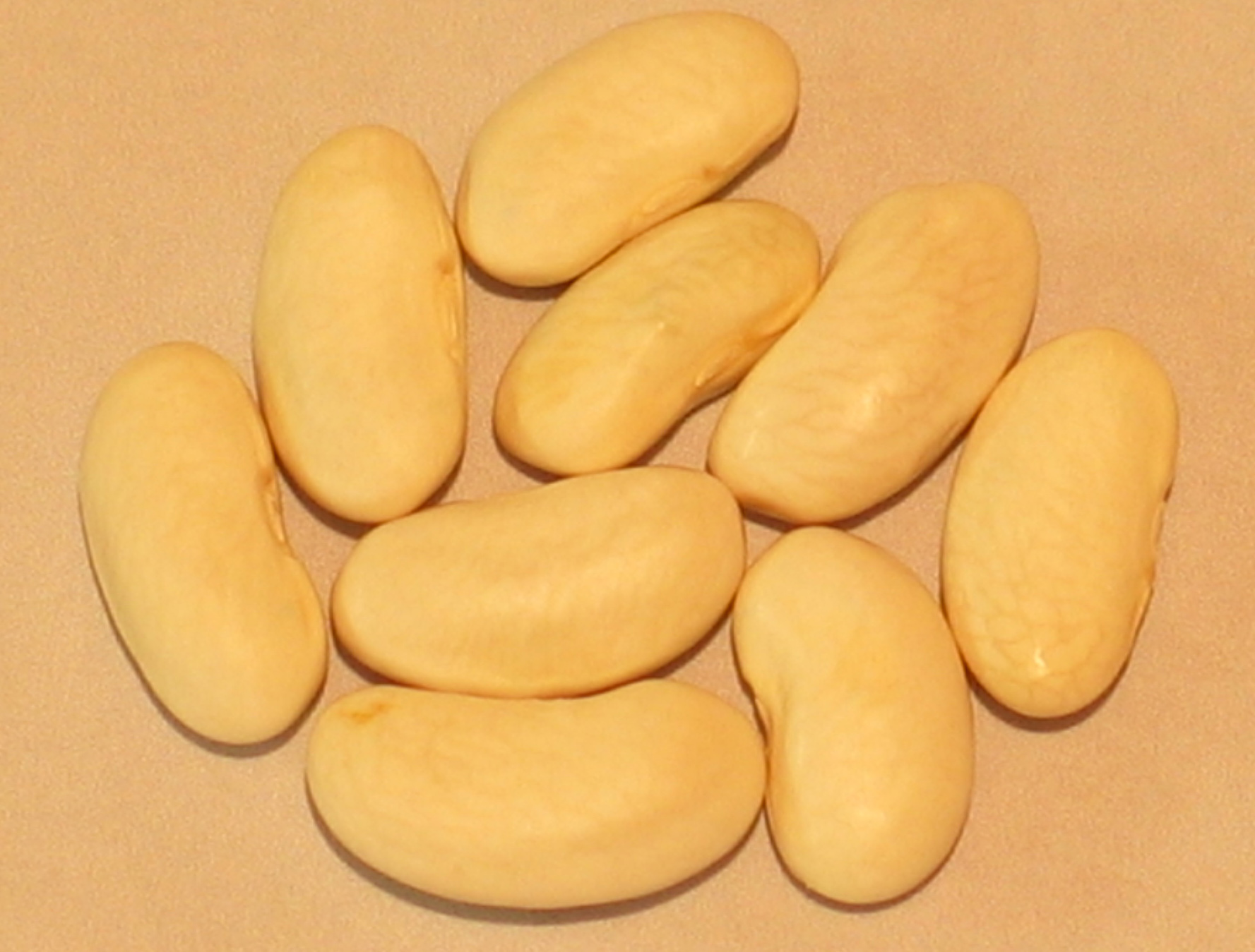 image of Kentucky Wonder White Seed beans