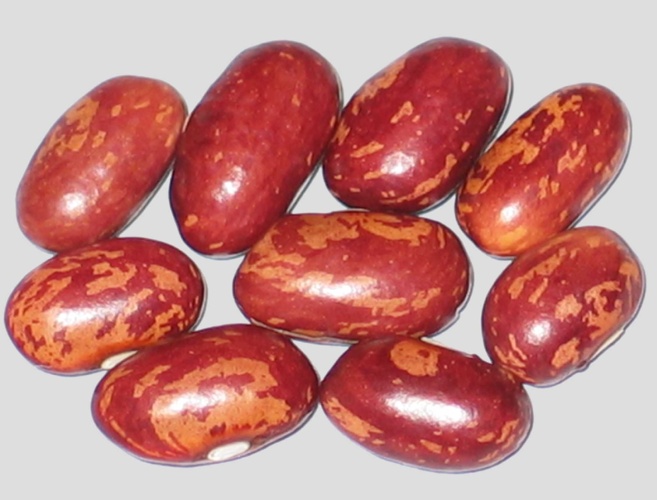 image of Kijimame 1 beans