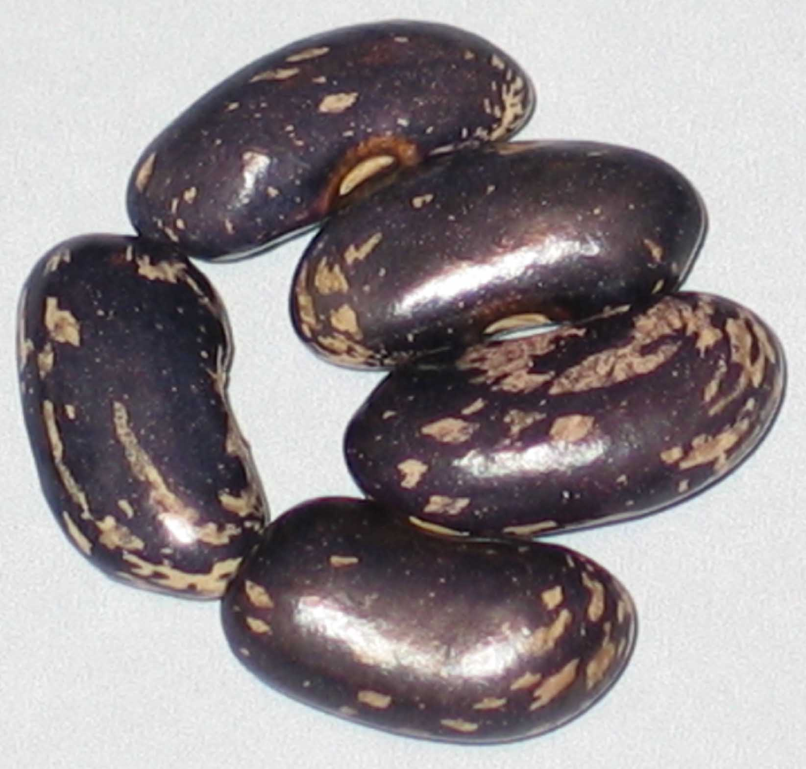 image of Koronis Purple Outcross beans