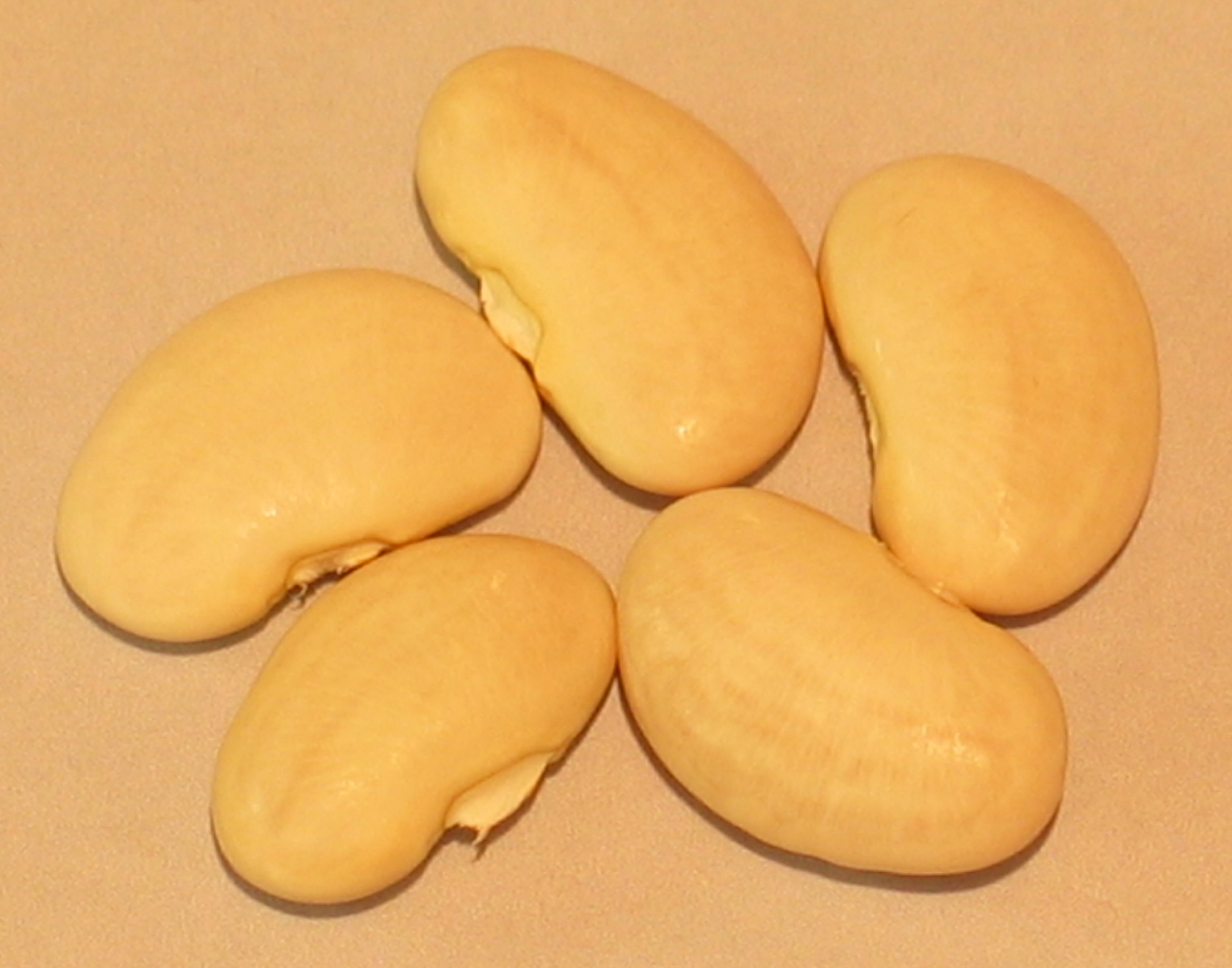 image of Large White Lima beans