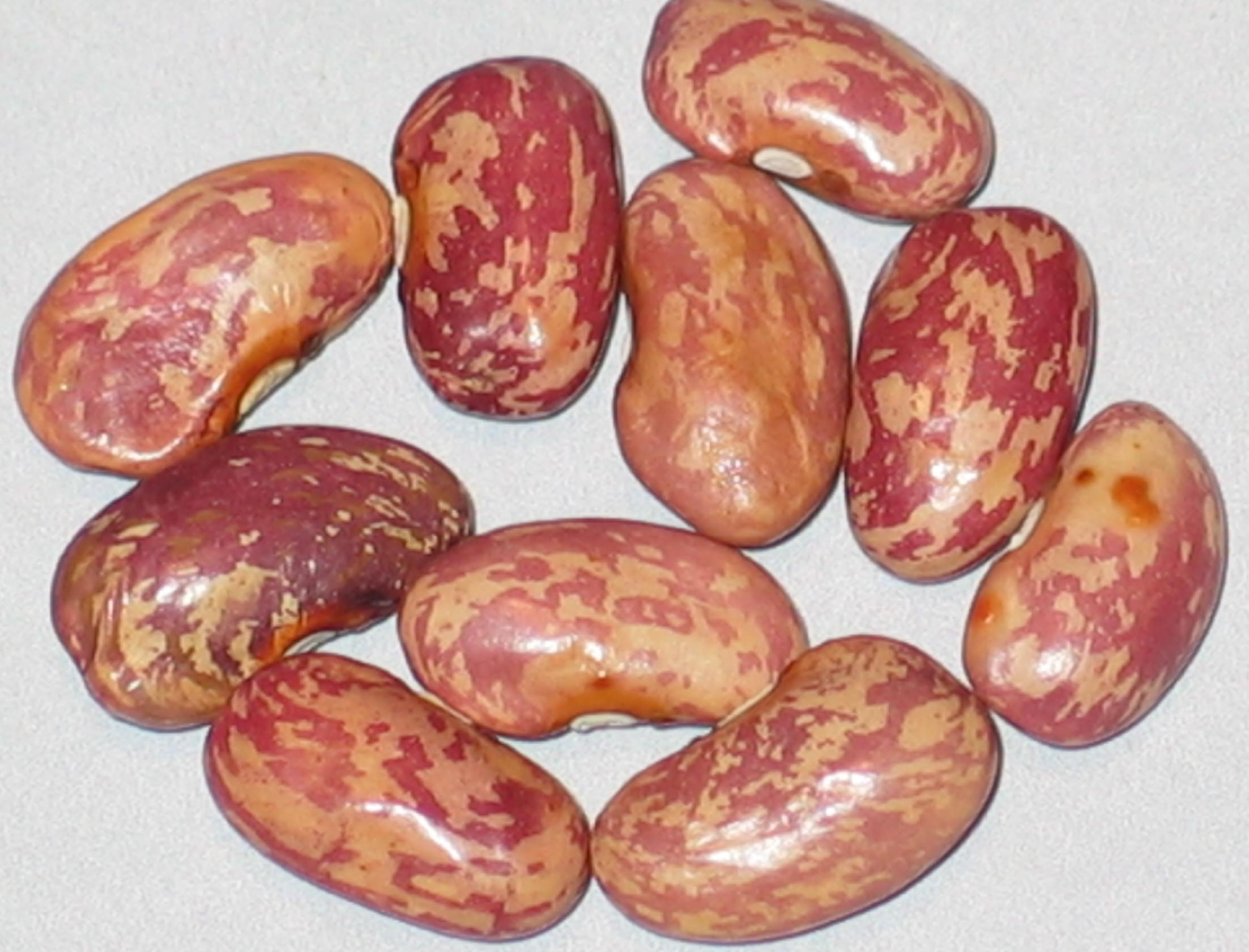 image of Long Holler beans
