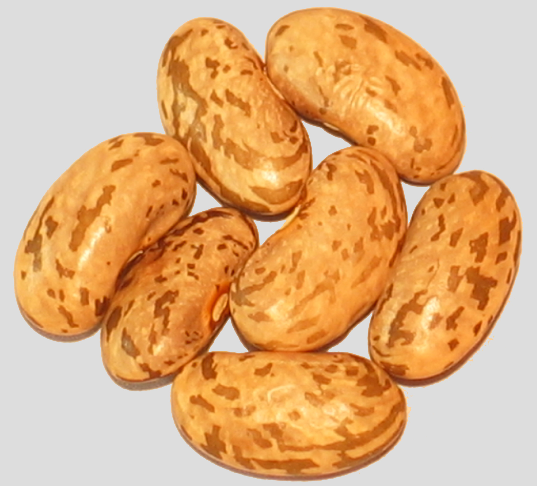 image of  Malawi Pinto beans