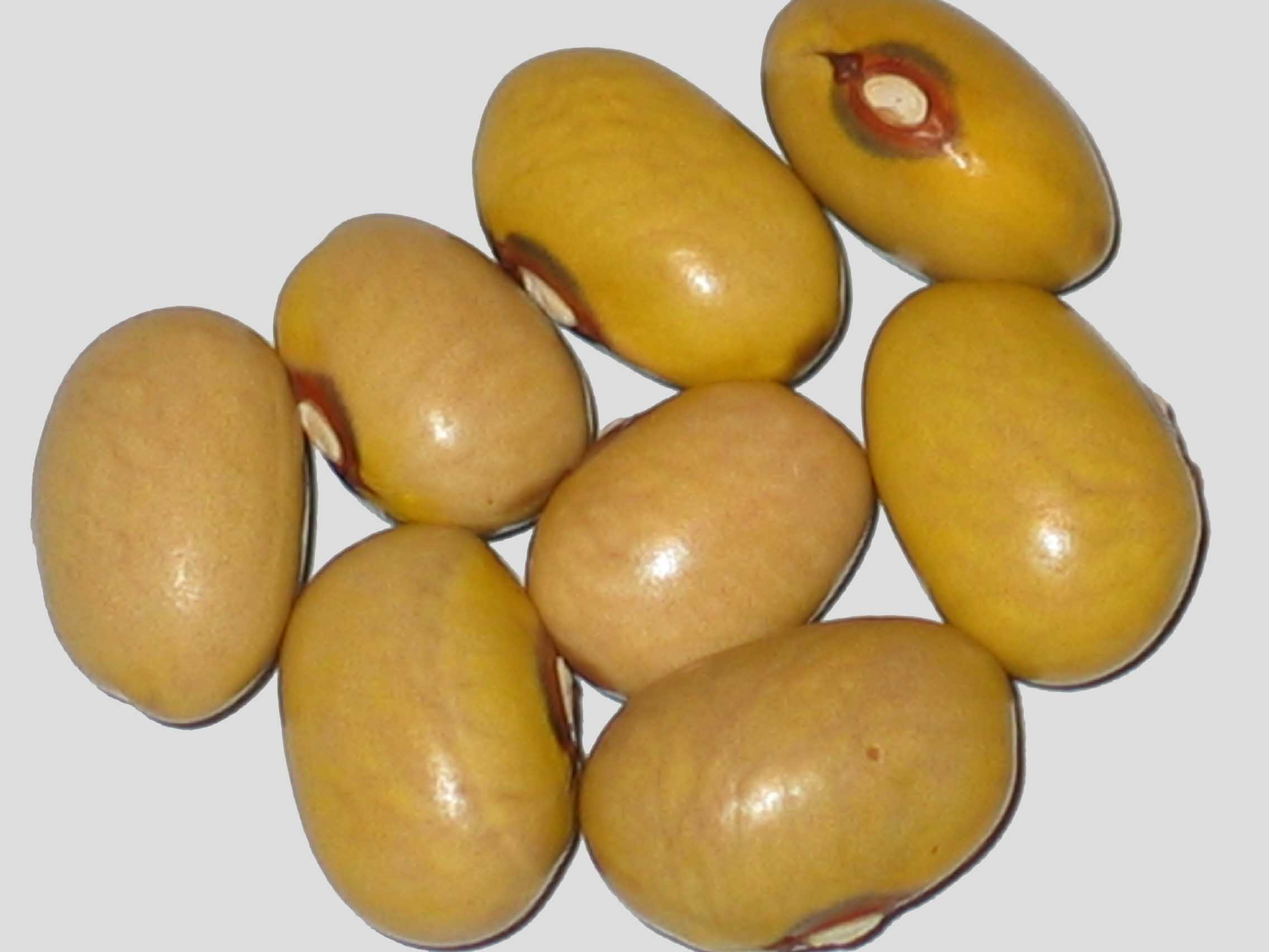 image of Oude Sloveense Boterboon beans