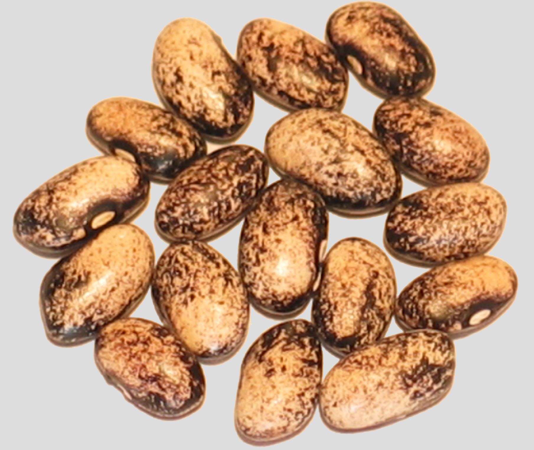 image of Passage To India beans
