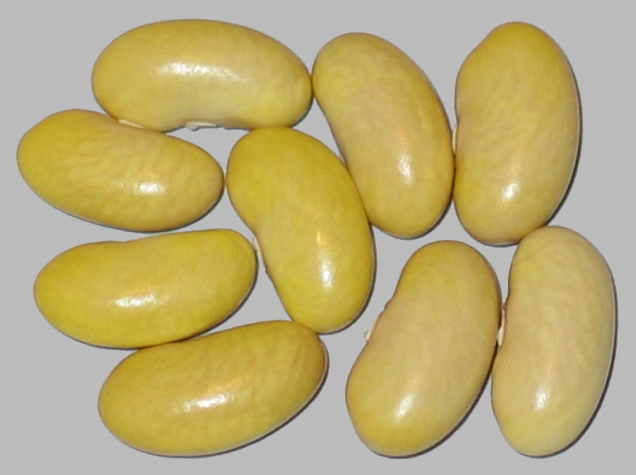 image of Peruano beans