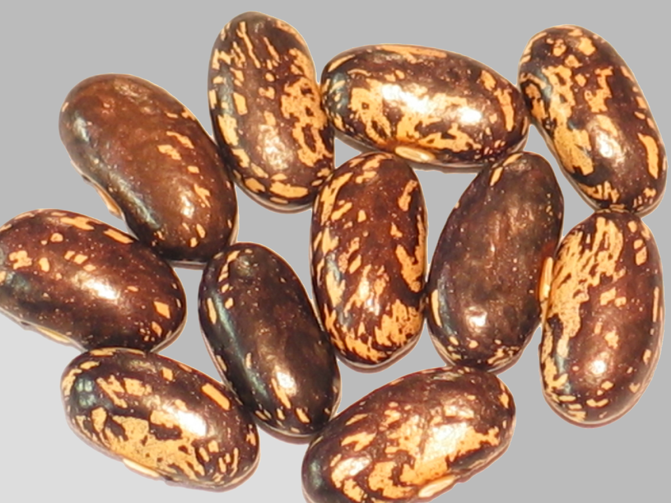 image of Preston's Old Family Heirloom beans