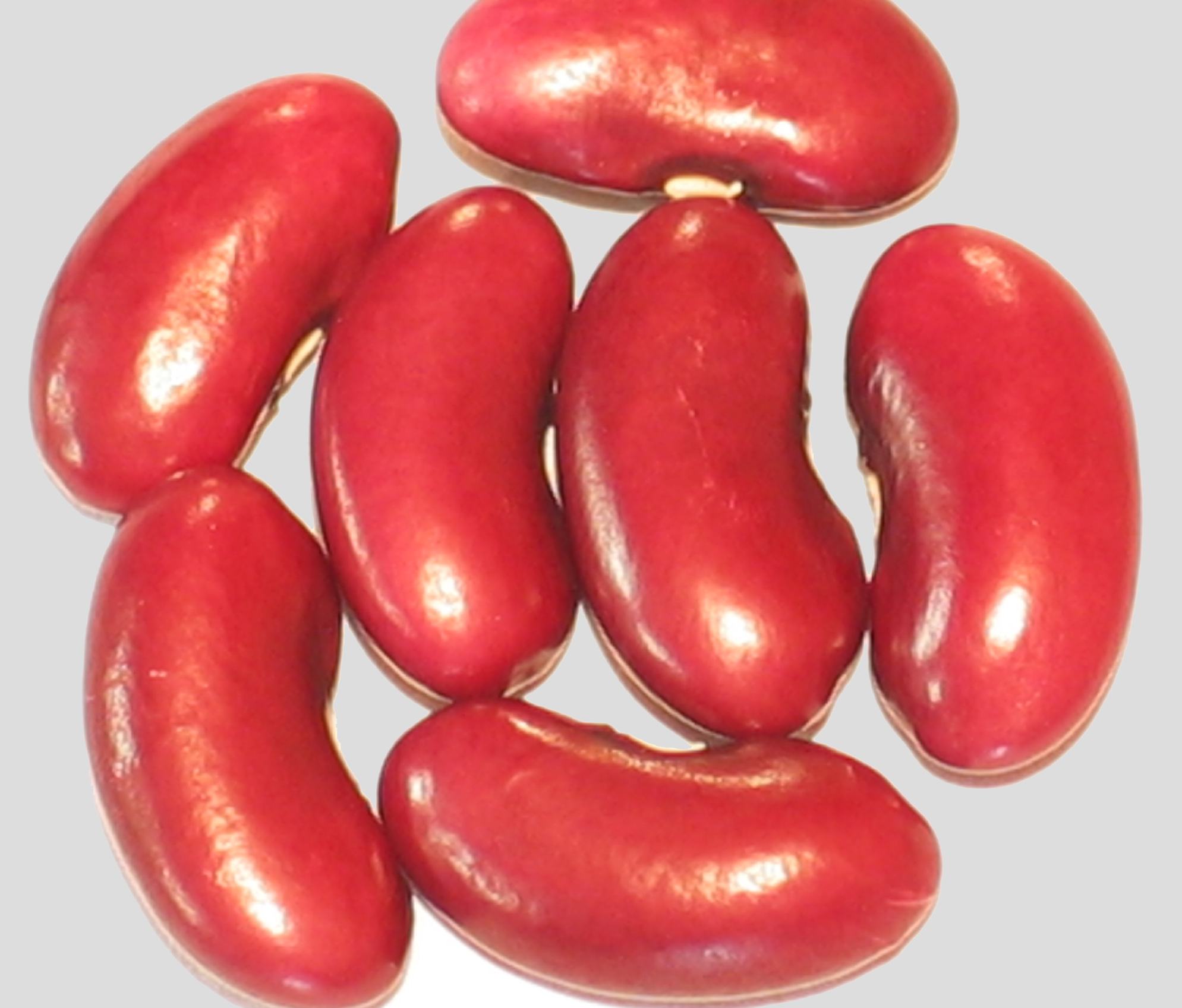 image of Red Rajma beans