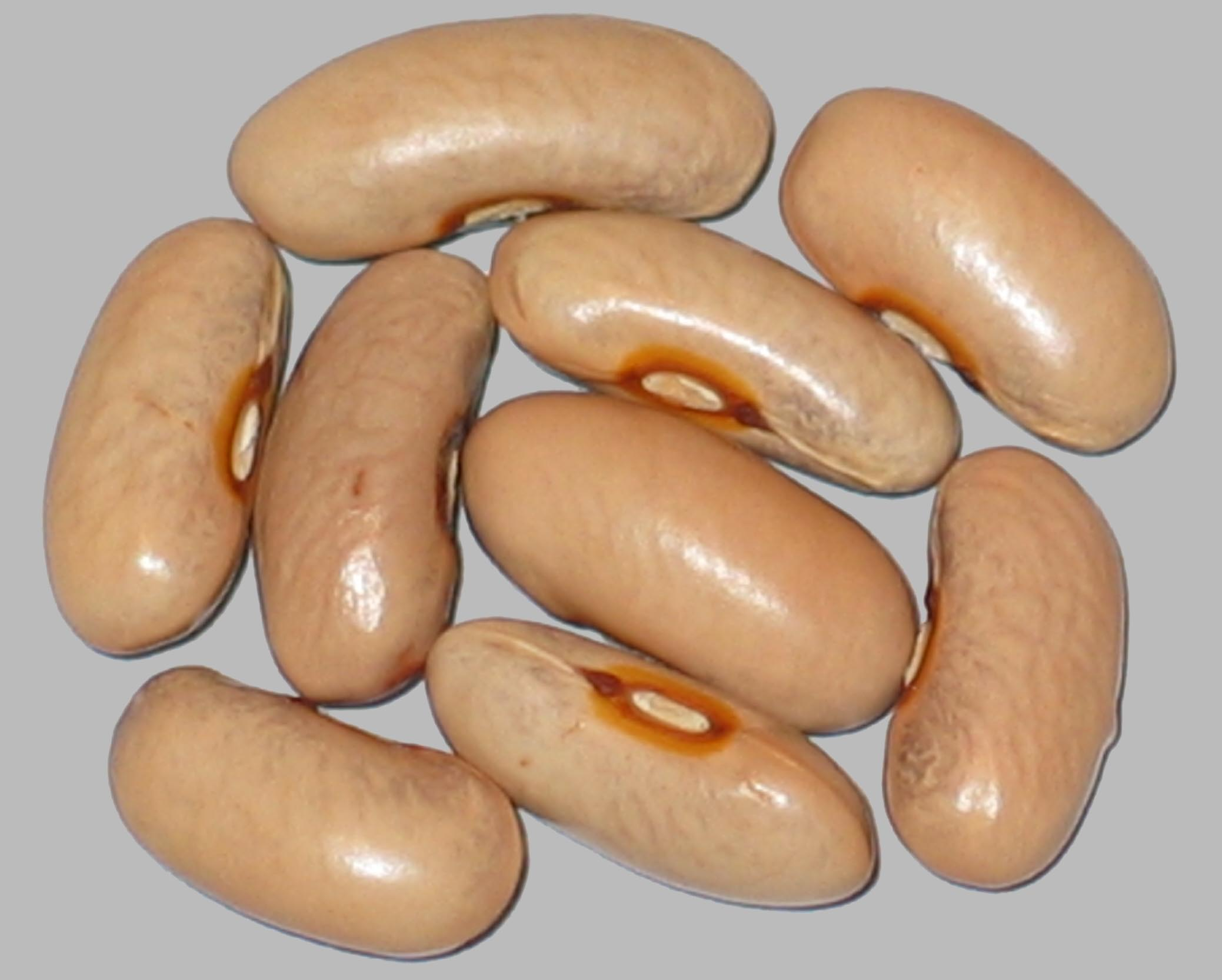image of Saconel beans