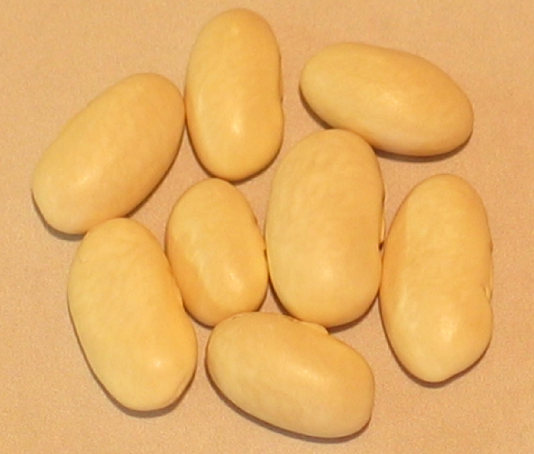 image of Sallee Dunahoo Family's McCaslan beans