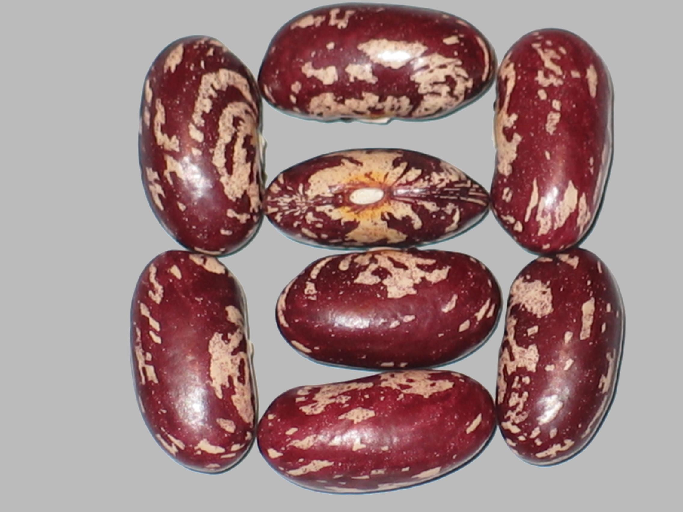 image of Shelleasy X Soldier beans