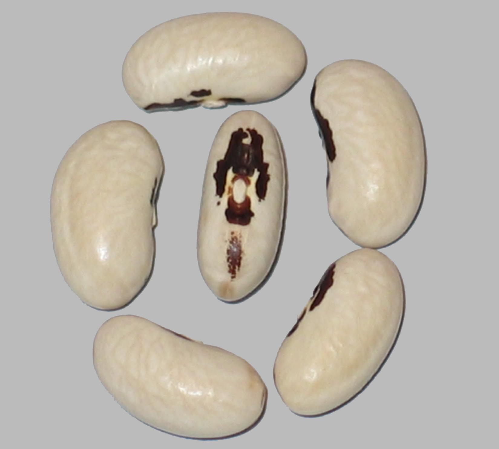 image of Southern Soldier beans