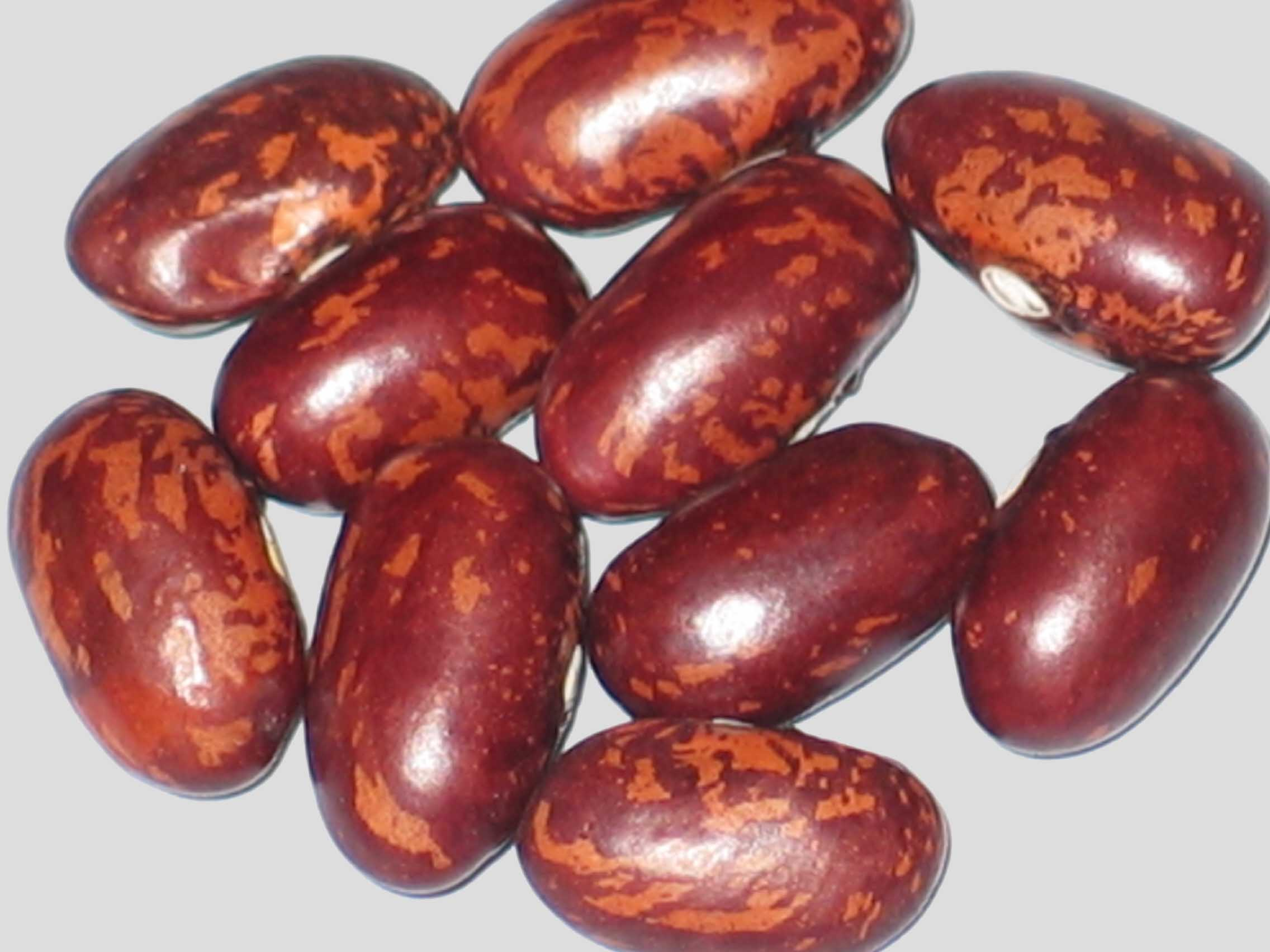image of Speckled Japan beans