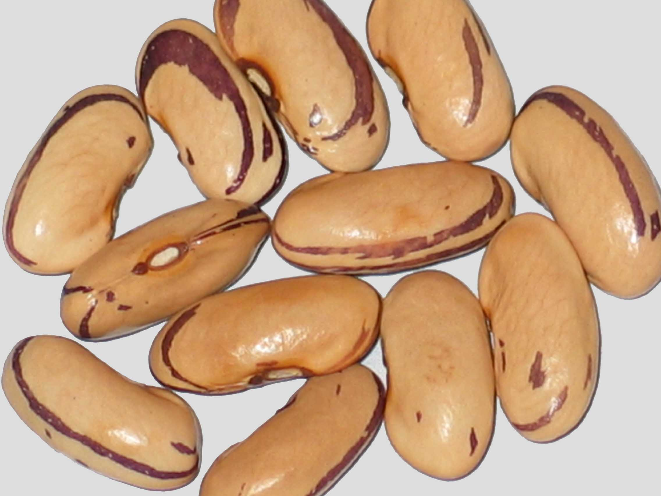 image of Sycamore Mascara beans
