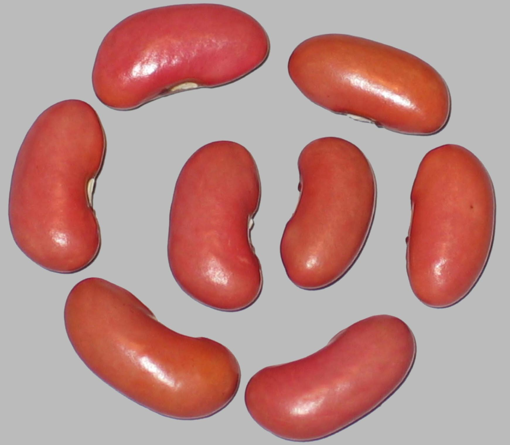image of Theresa's Pink Portugal beans