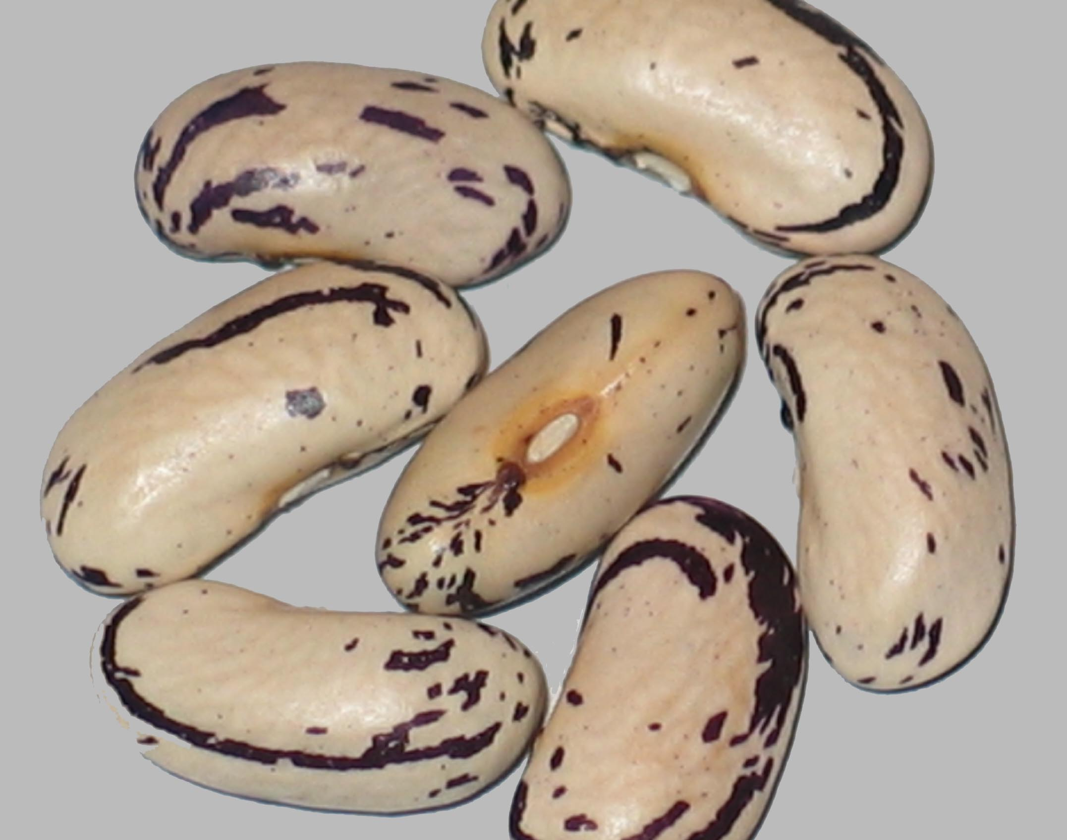 image of Thibodeau Compte Beauce beans