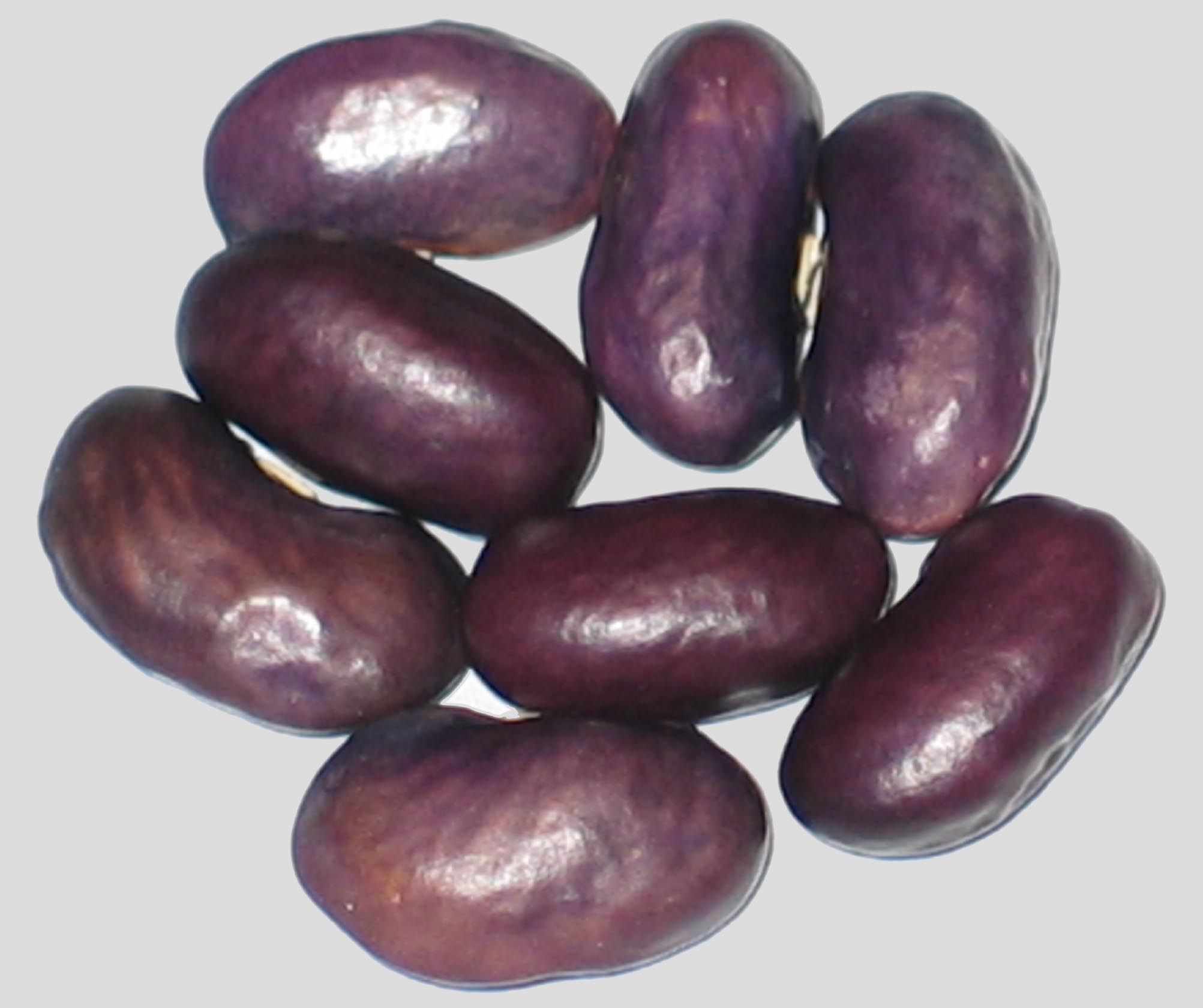 image of Tyra beans