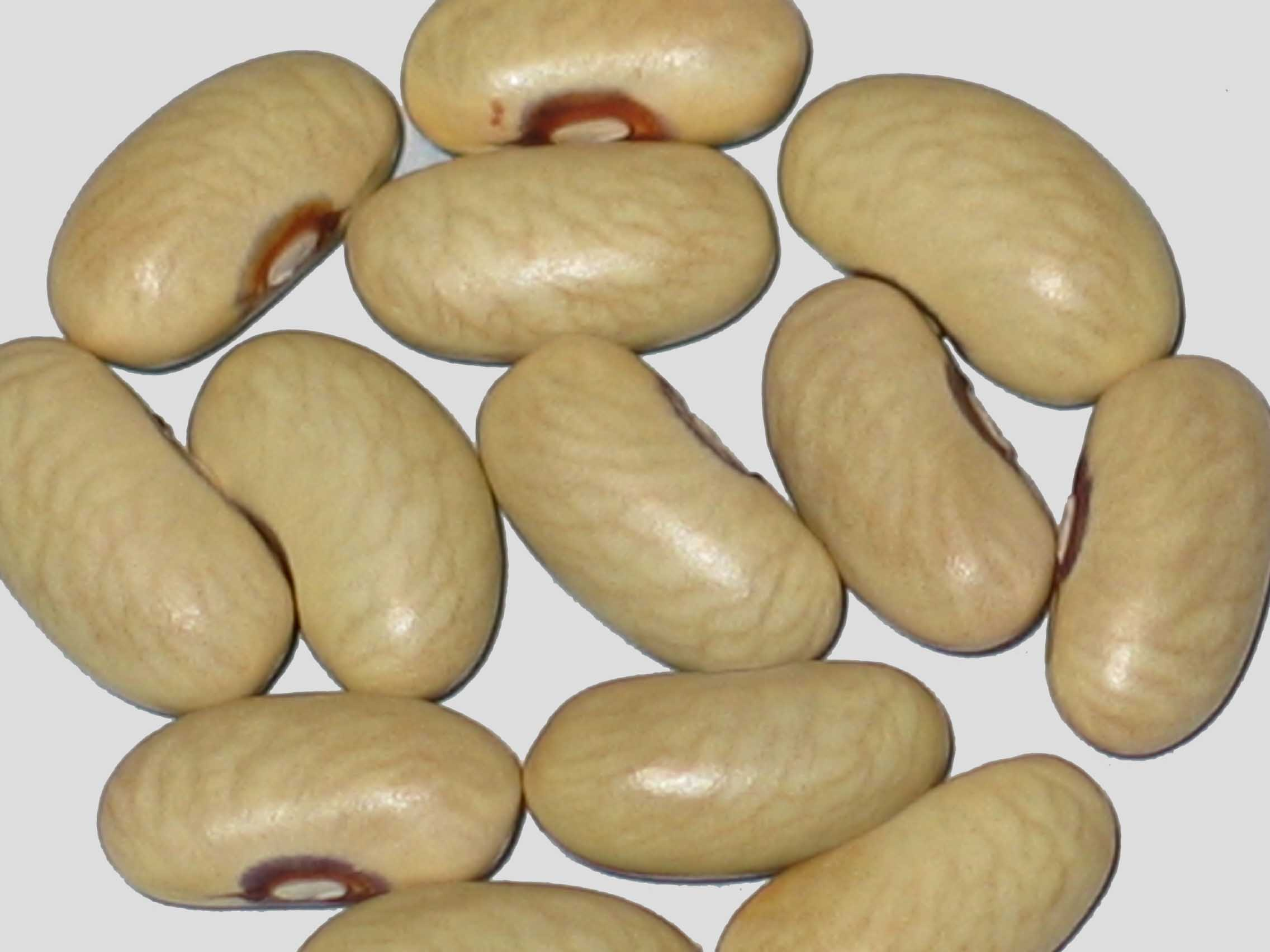 image of Vodenjak 1 beans