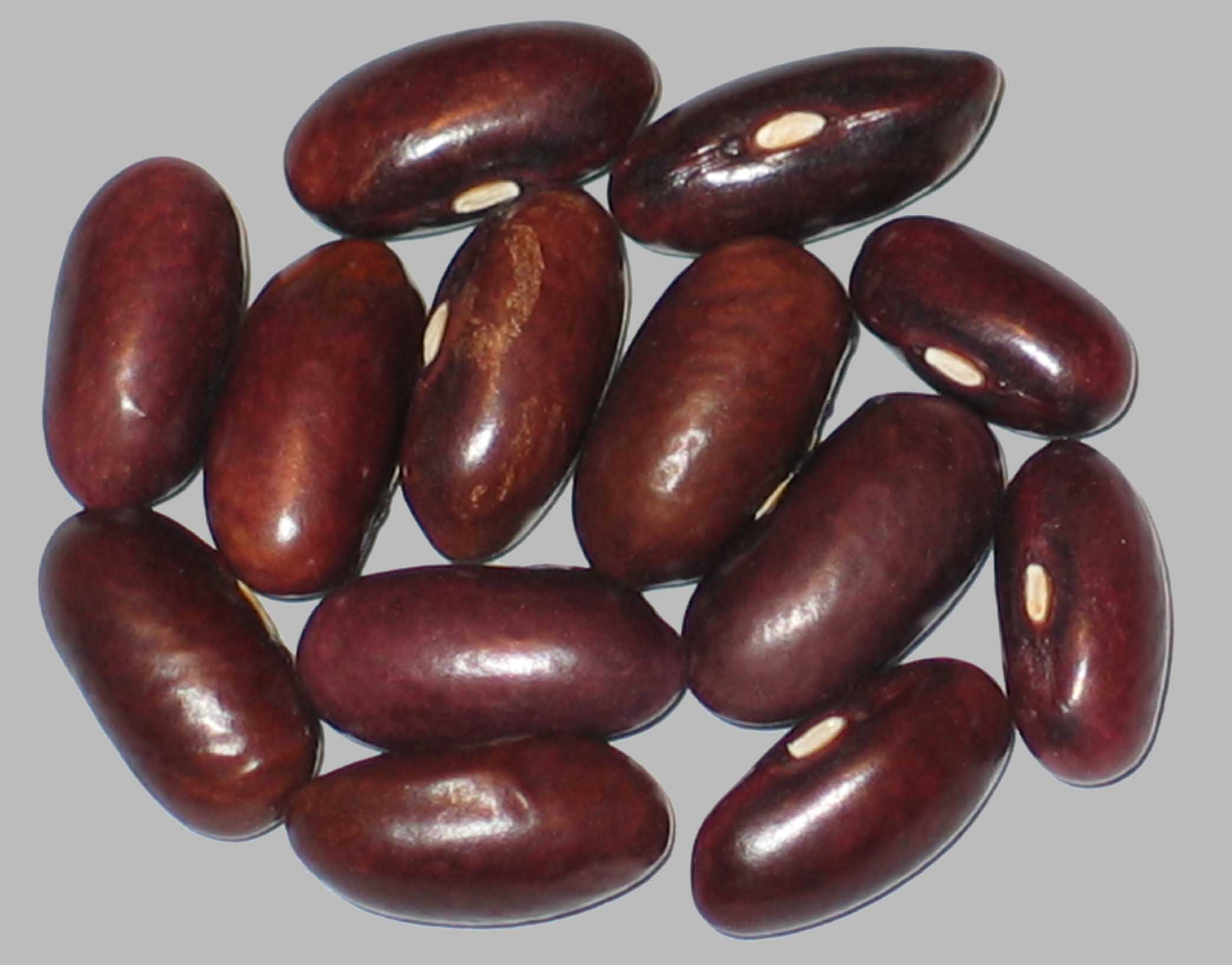 image of Wadex beans