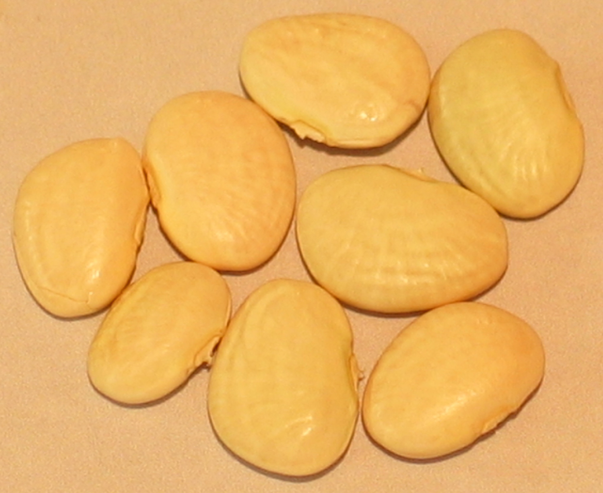 image of White Baby Lima beans