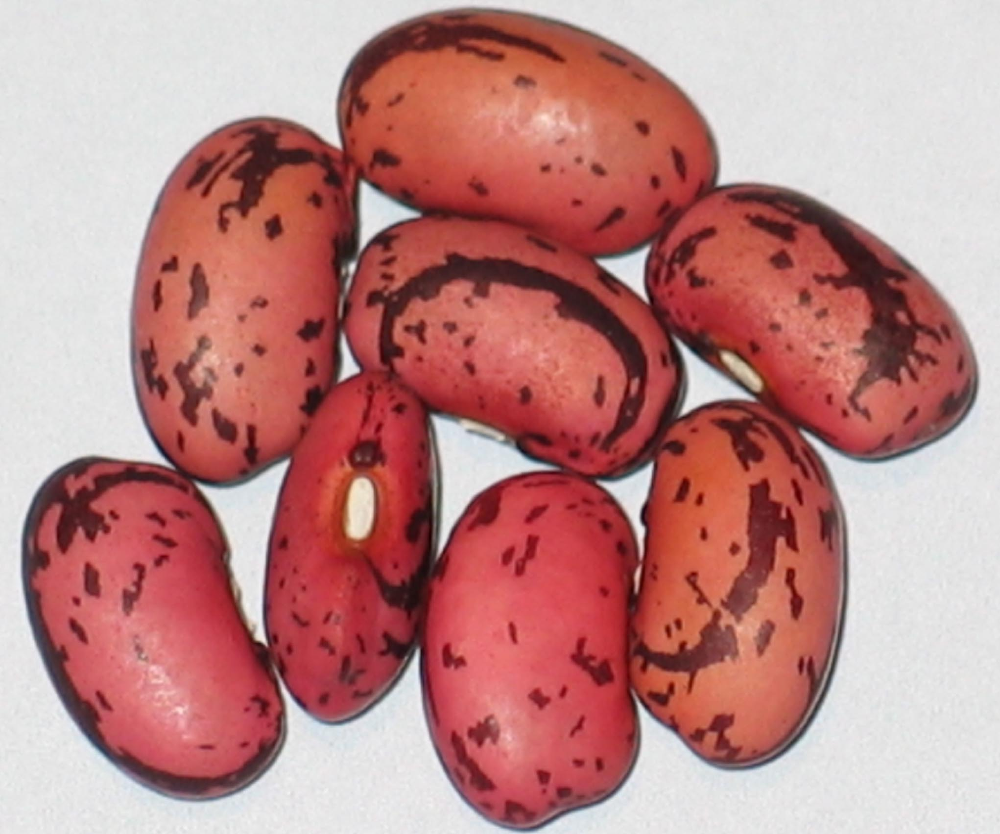 image of African Premier beans