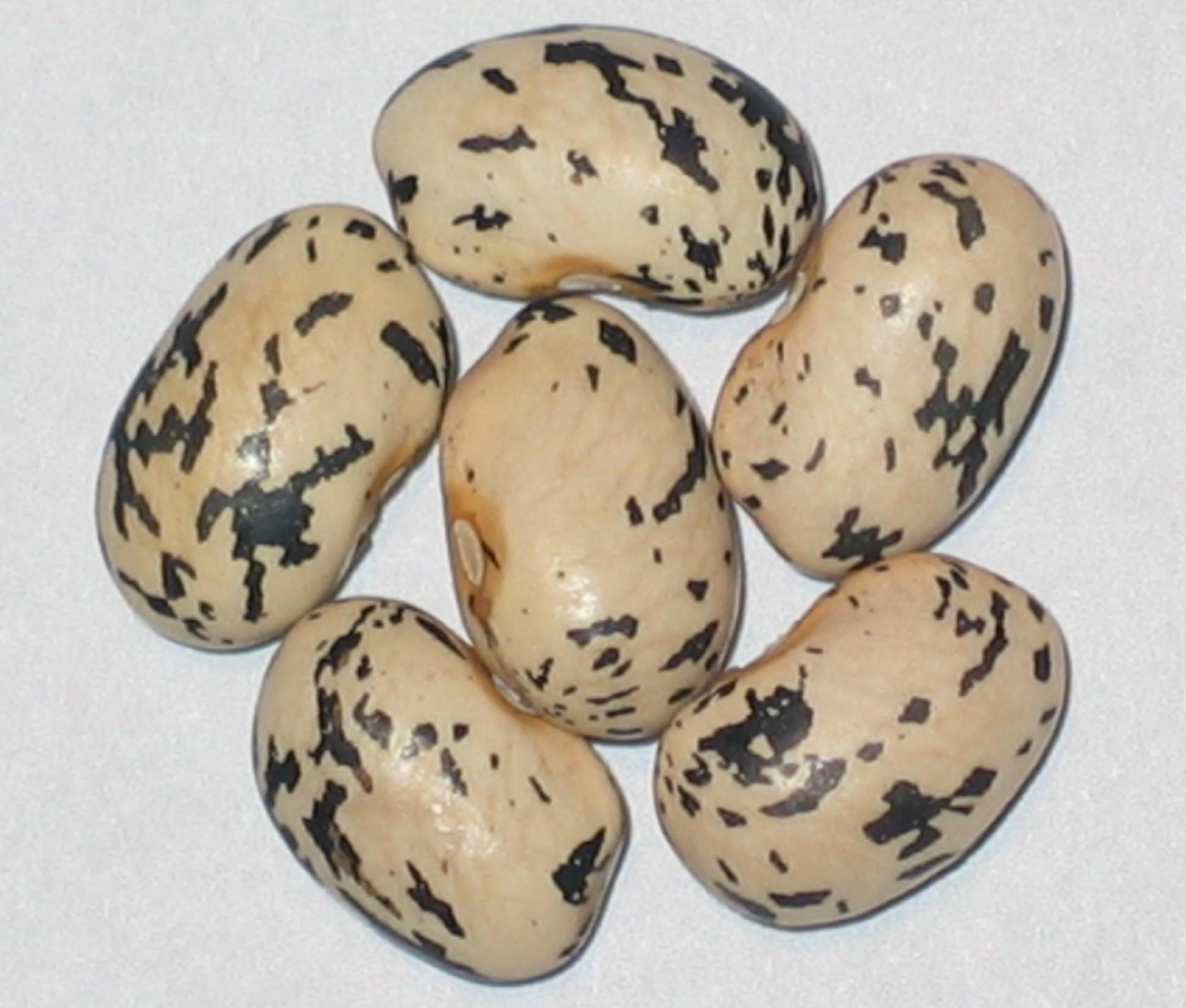 image of Black And White Goose beans