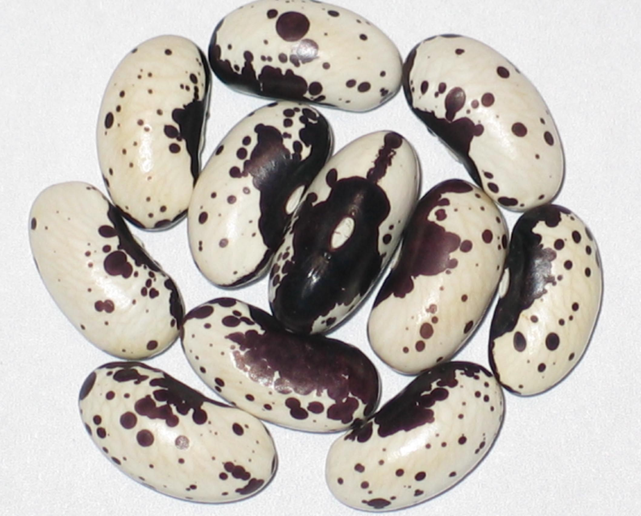 image of Black Trout beans