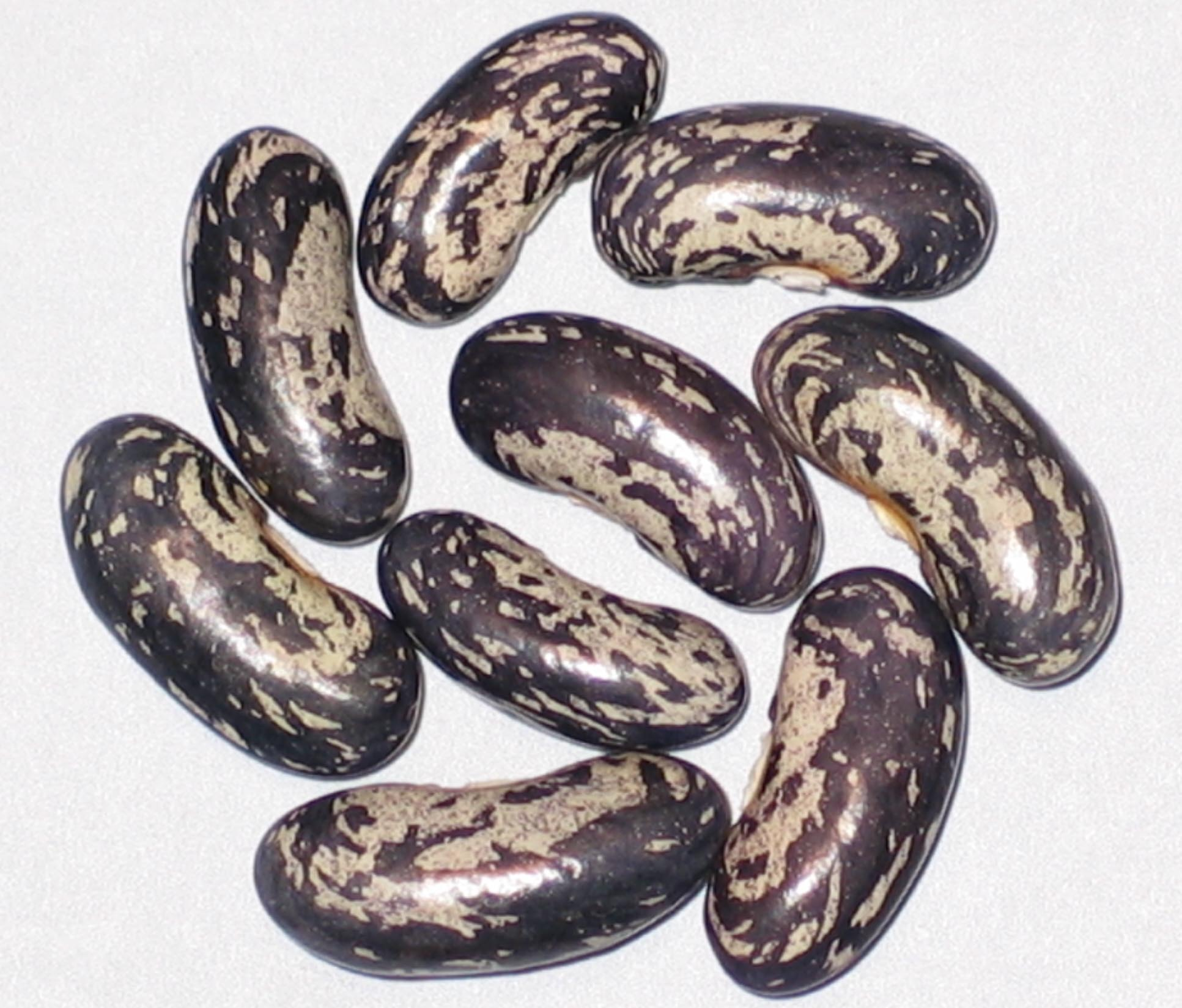 image of Blue Jay beans
