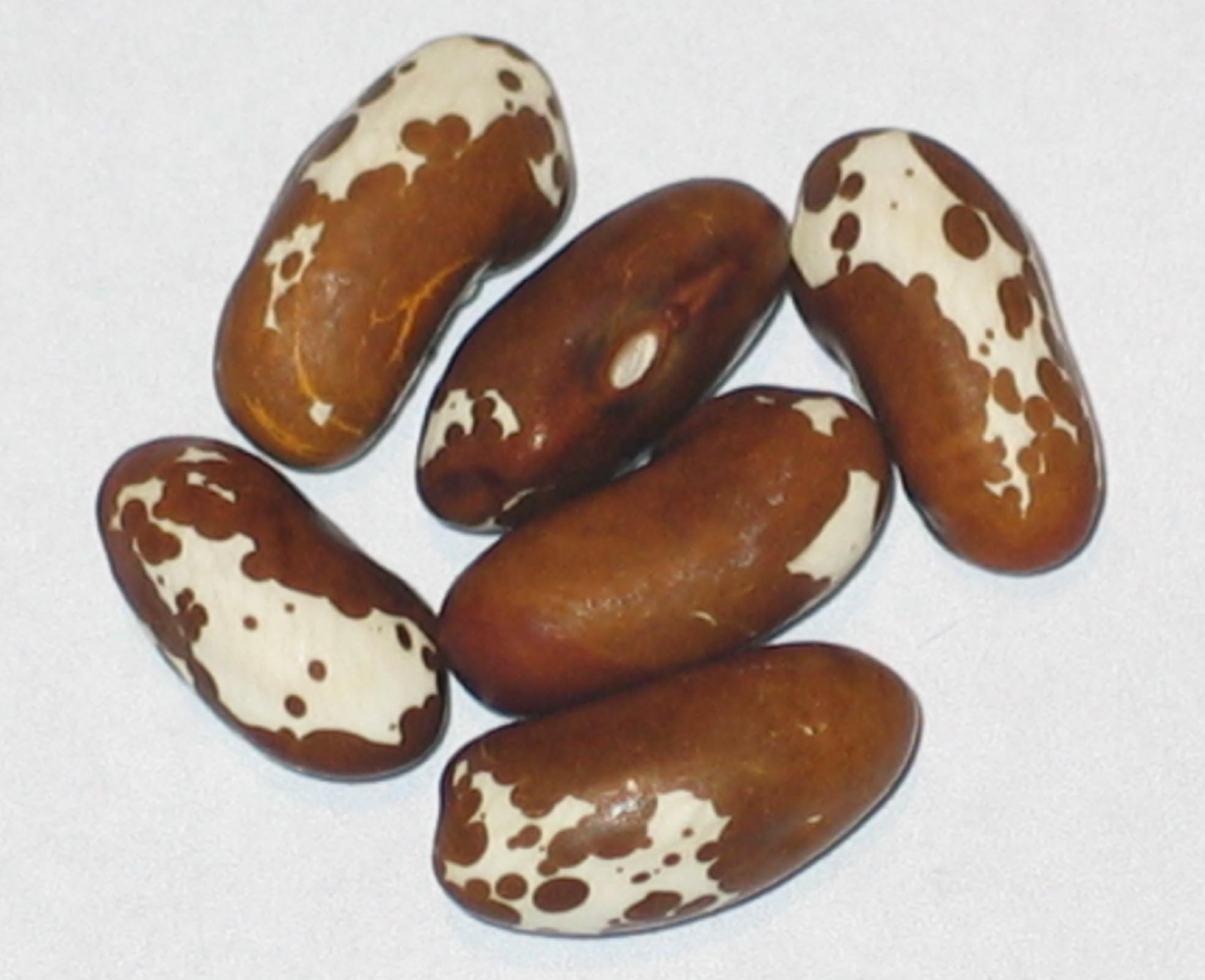 image of Brown Trout beans