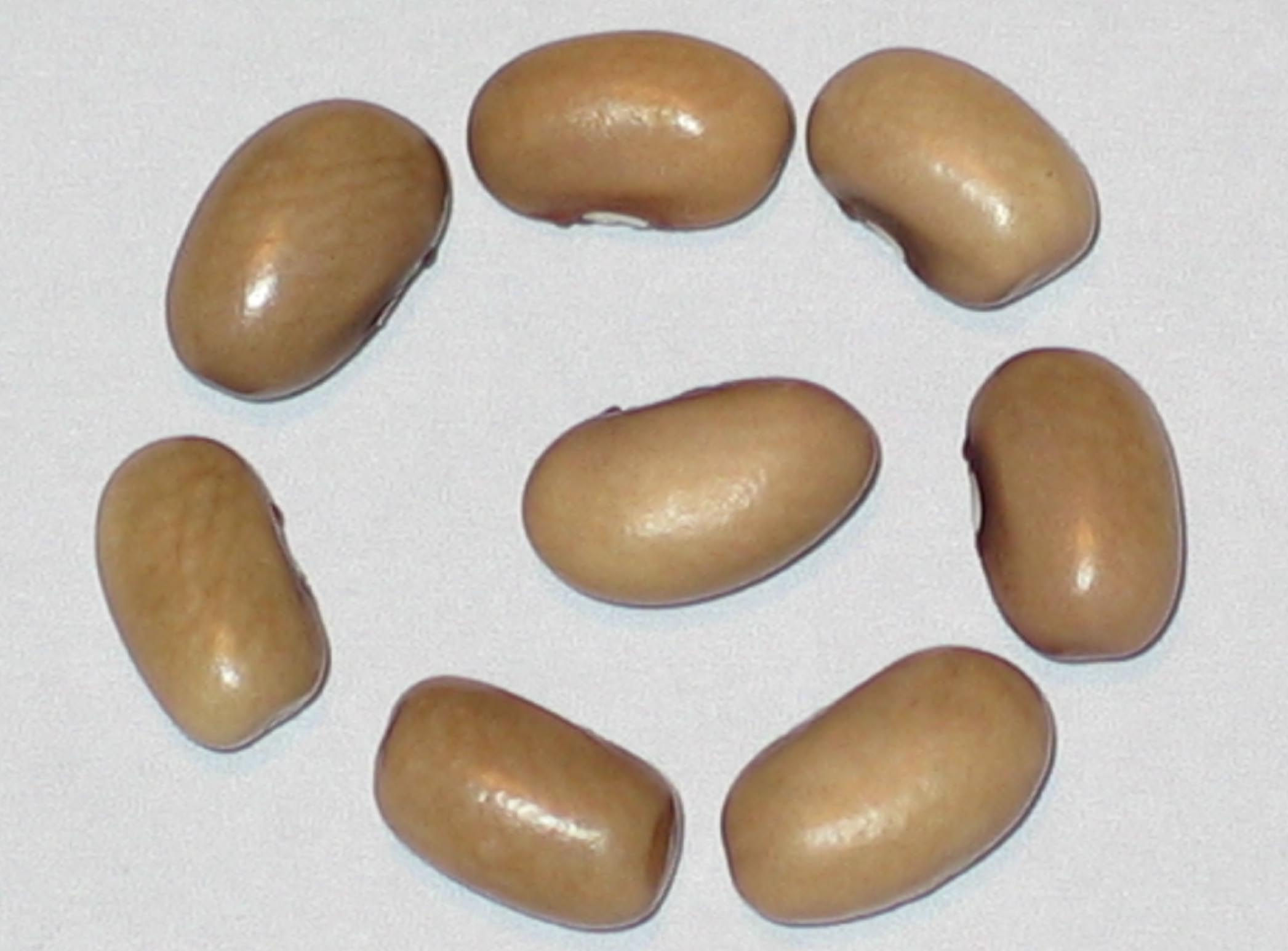 image of California beans