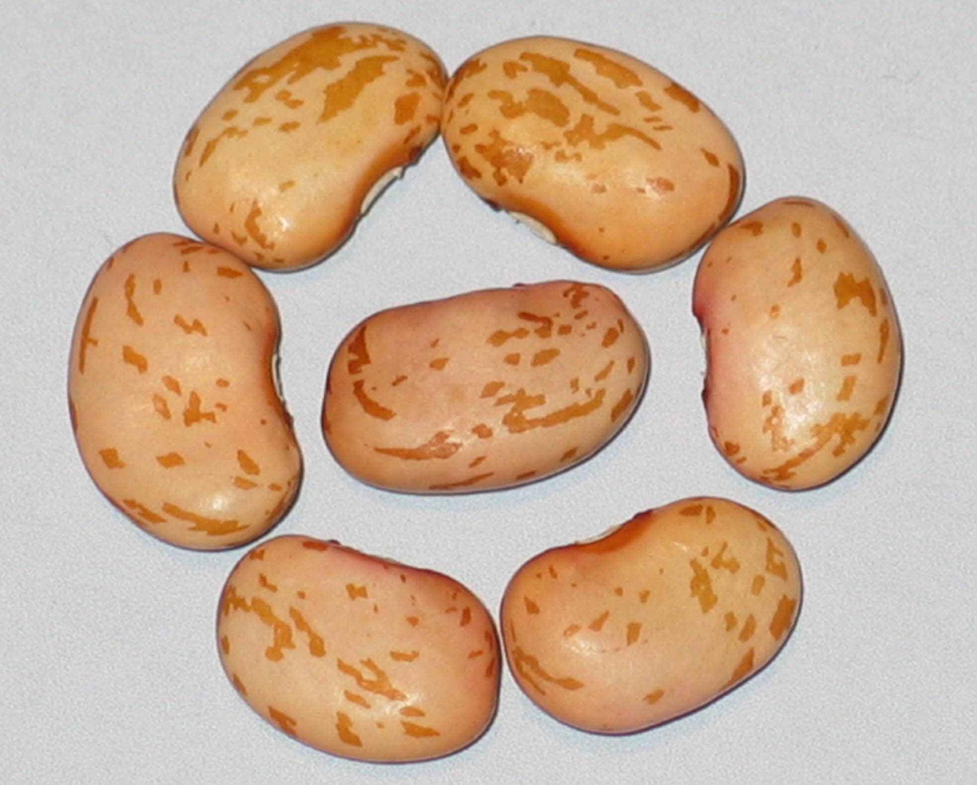 image of Golden Lima beans