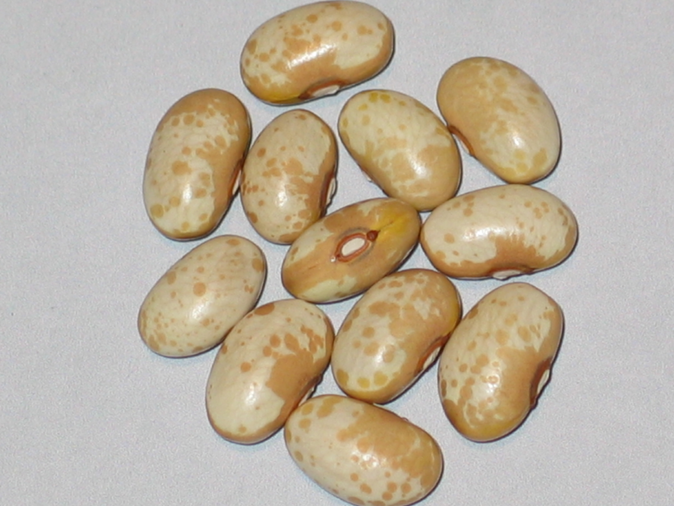 image of Golden Valley beans